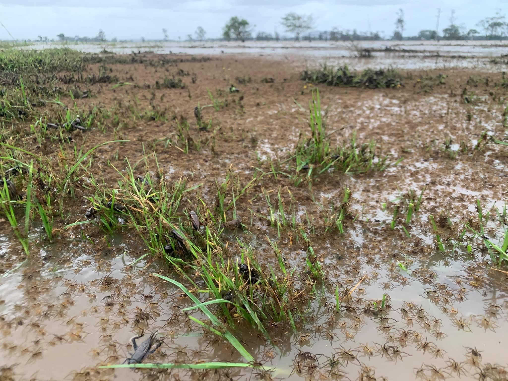 Az ausztrál férfi kinézett a sáros mezőre, de nem sár volt az, hanem sokmillió barna pók, akik mind őfelé tartottak
