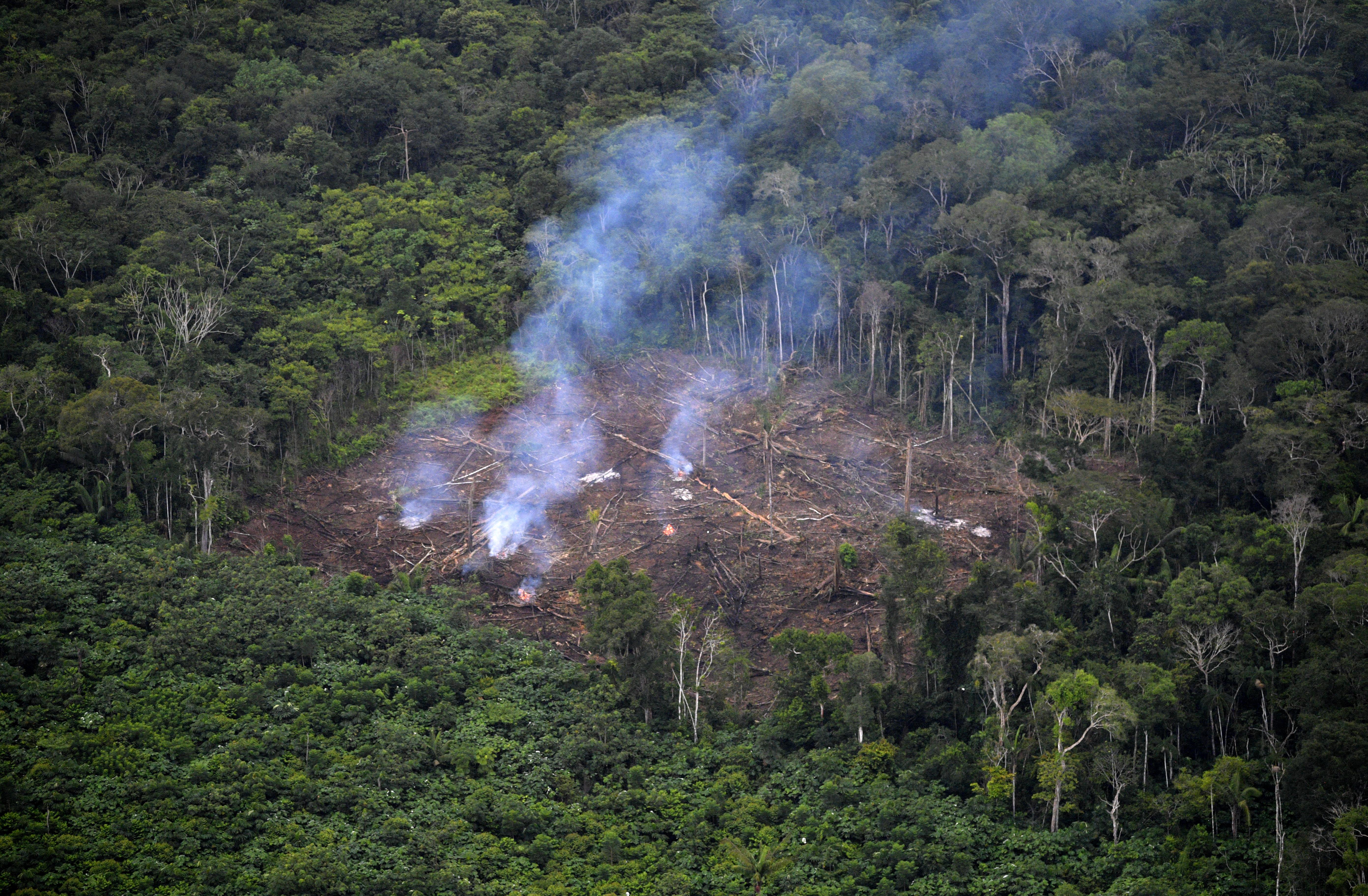 Több mint négymillió hektárnyi őserdő veszett oda 2020-ban