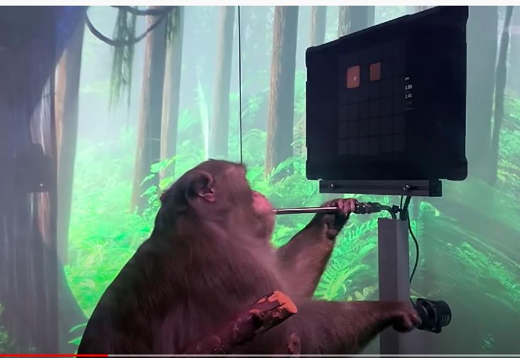 A tudósok és az etikusok sem örvendeznek Elon Musk majomkísérlete láttán
