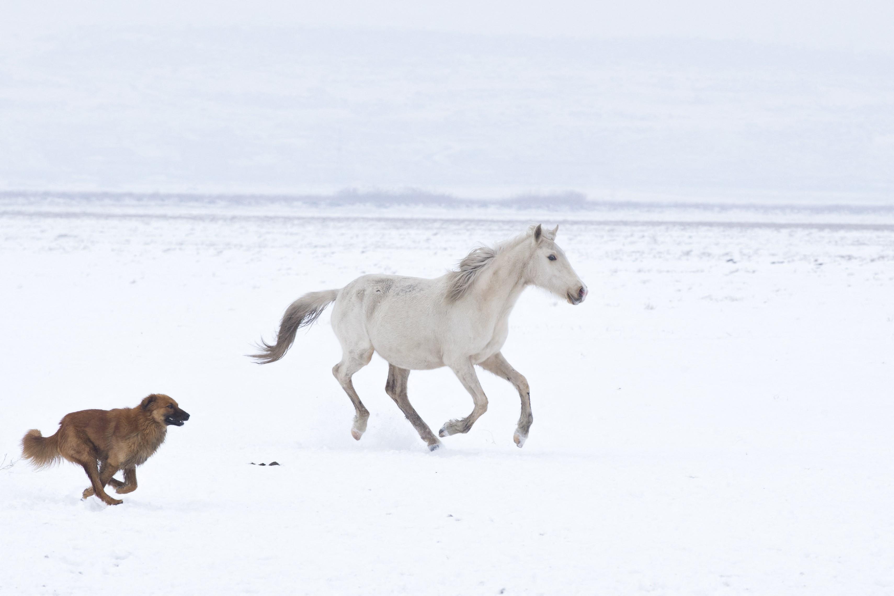 A póráz nélkül sétáltatott kutyák miatt ledobta a lovasát, majd egy teherautó elé ugrott egy ló Kamaraerdőn