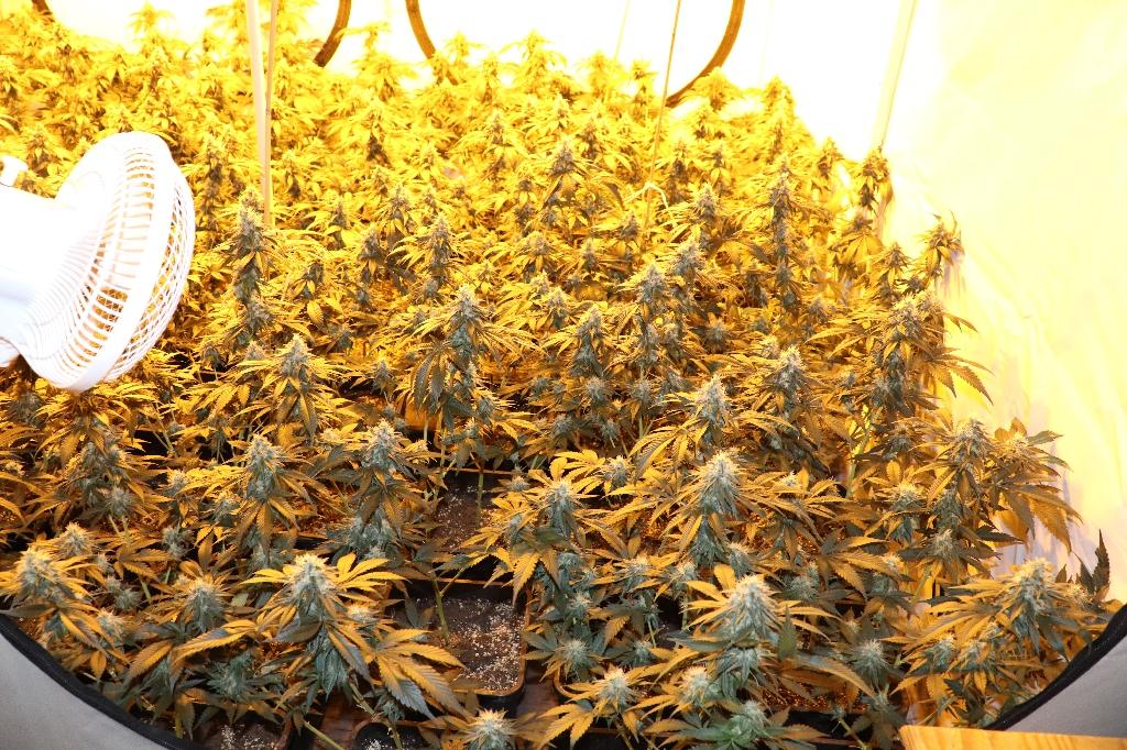 Durva fűszag buktatta le az Etele úti lakásukban marihuánát termesztő párt