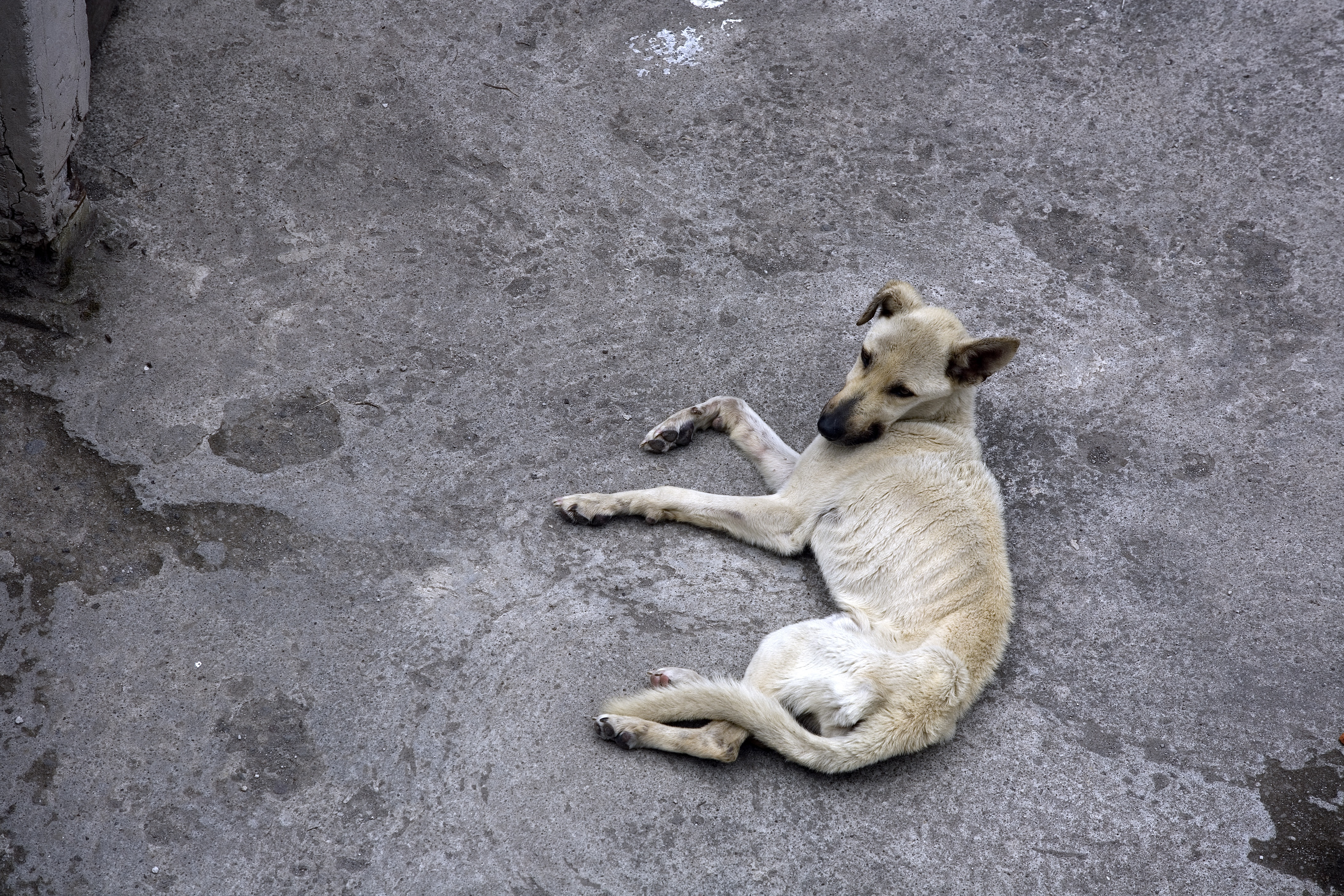 Jogerős börtönt kapott egy veszprémi férfi, amiért éheztette a kutyáját