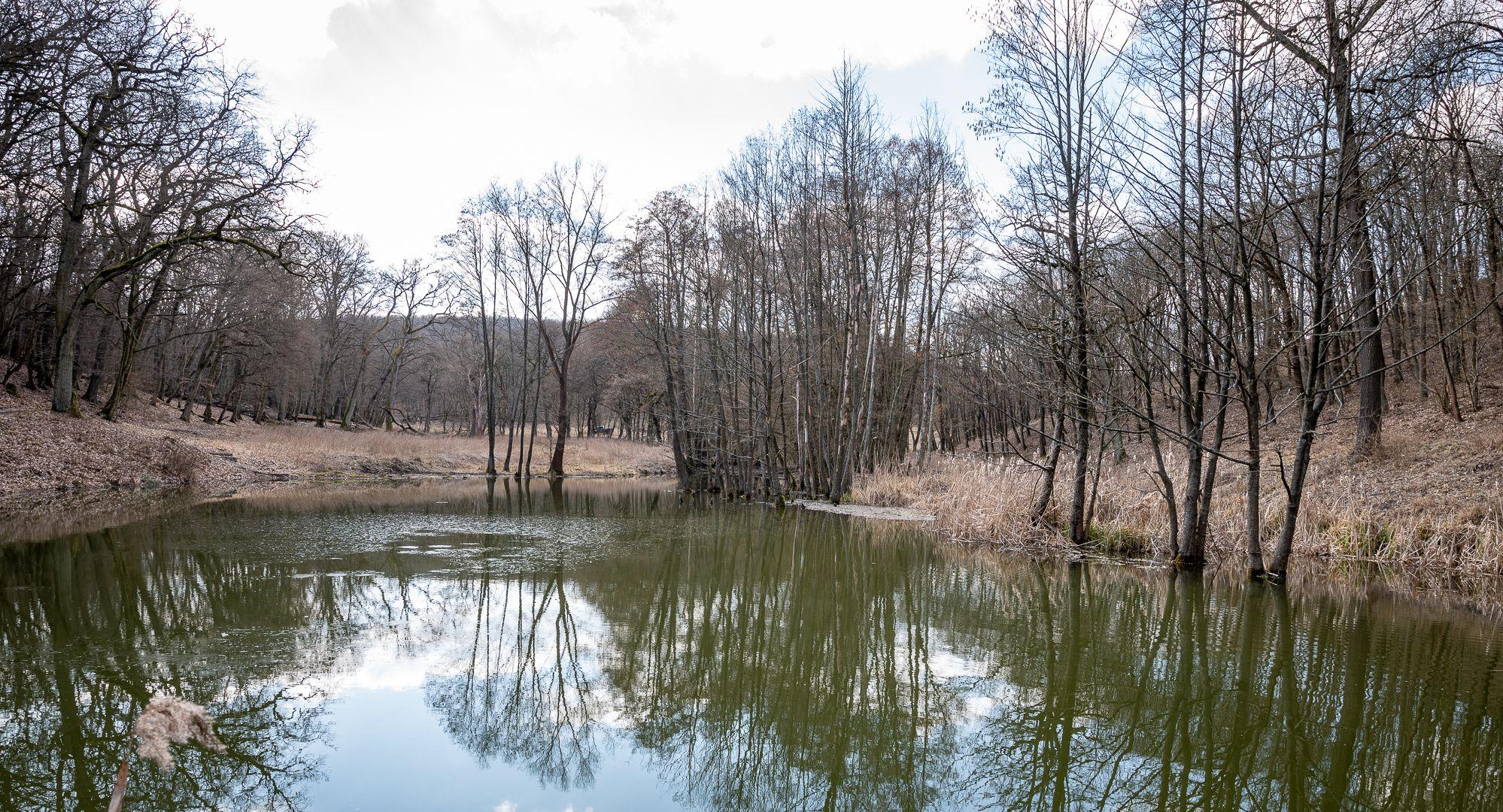 Érinthetetlenné vált egy erdő a Föld Napja alkalmából