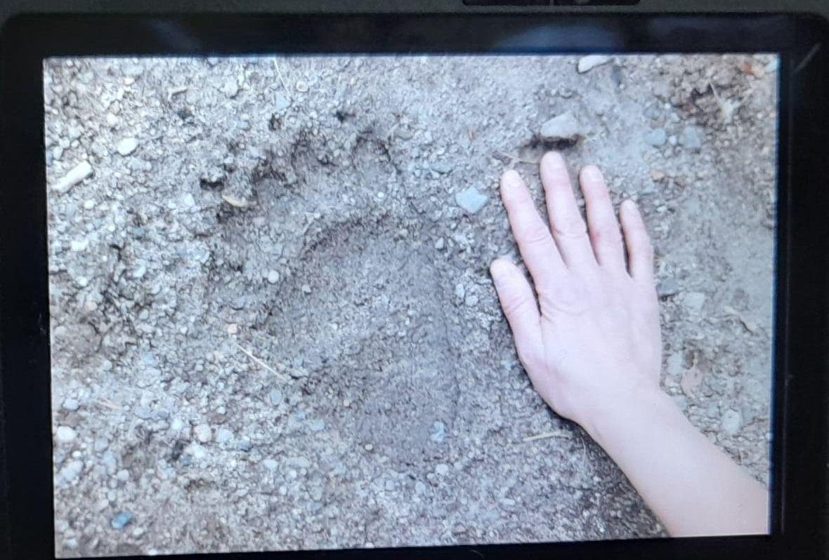 Medvenyomot találtak Diósjenőnél
