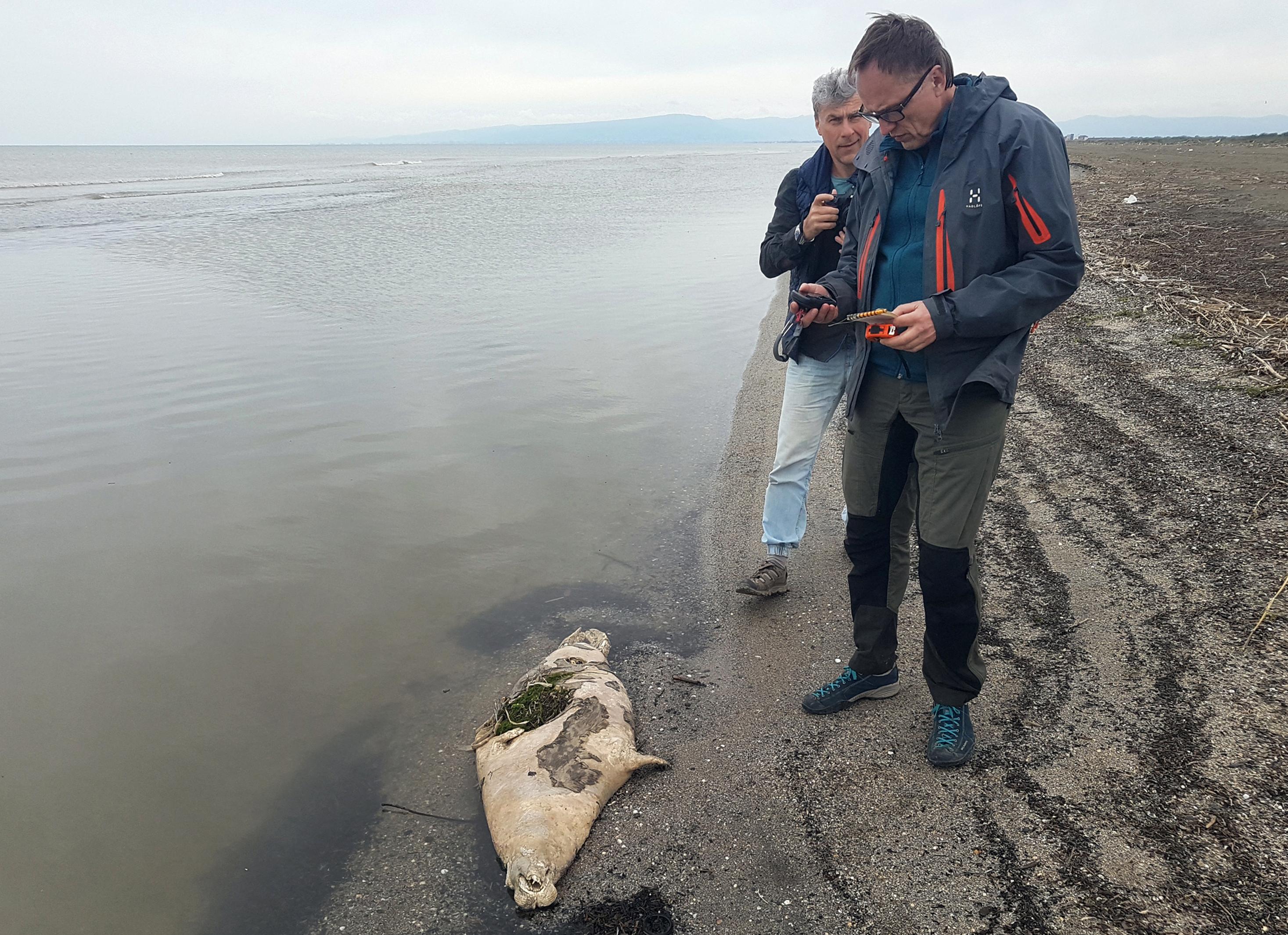 170 fiatal fóka tetemét mosta partra a víz a Kaszpi-tengernél