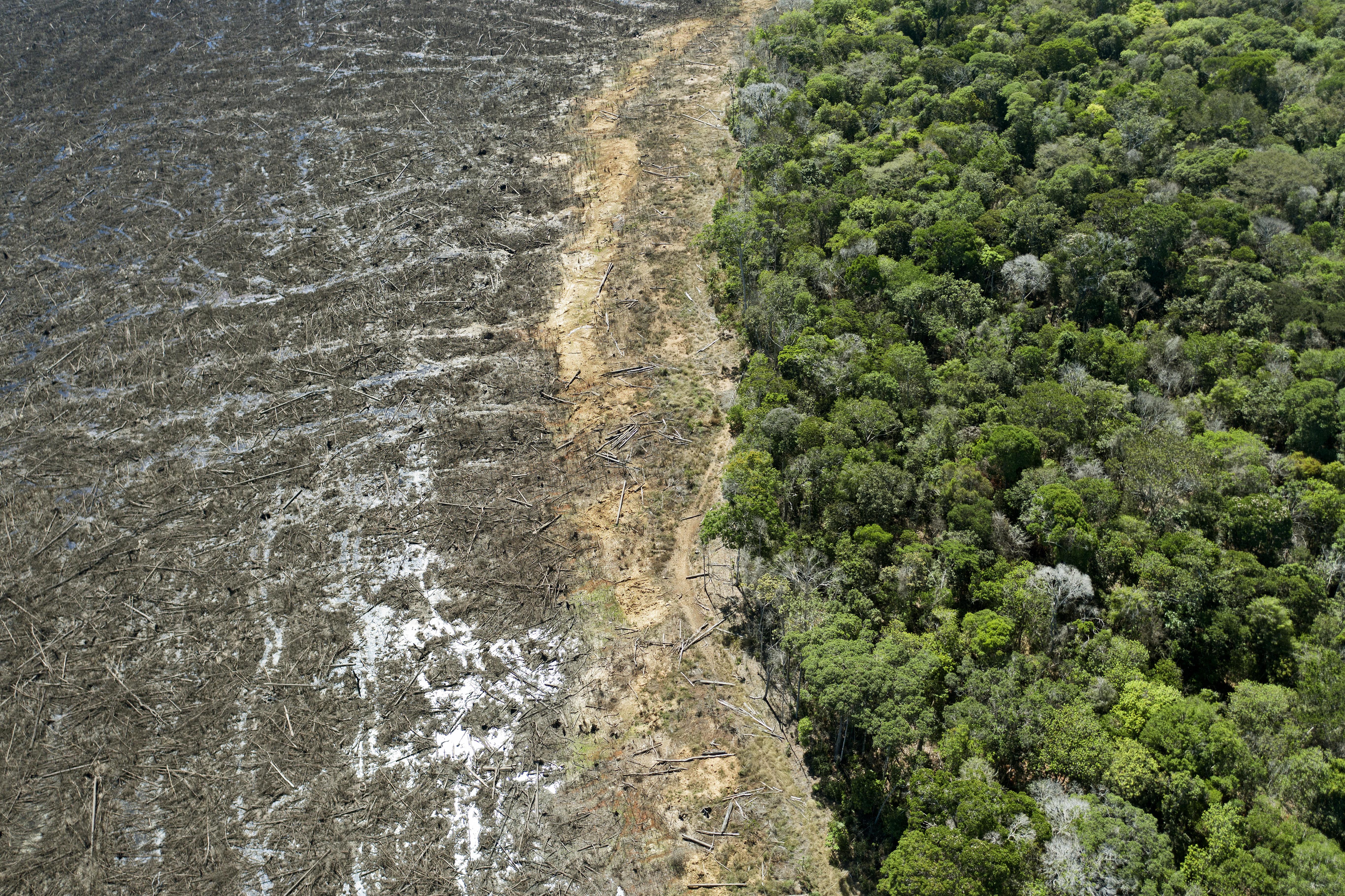 Megállíthatatlannak tűnik az erdőirtás az Amazonas-medencében