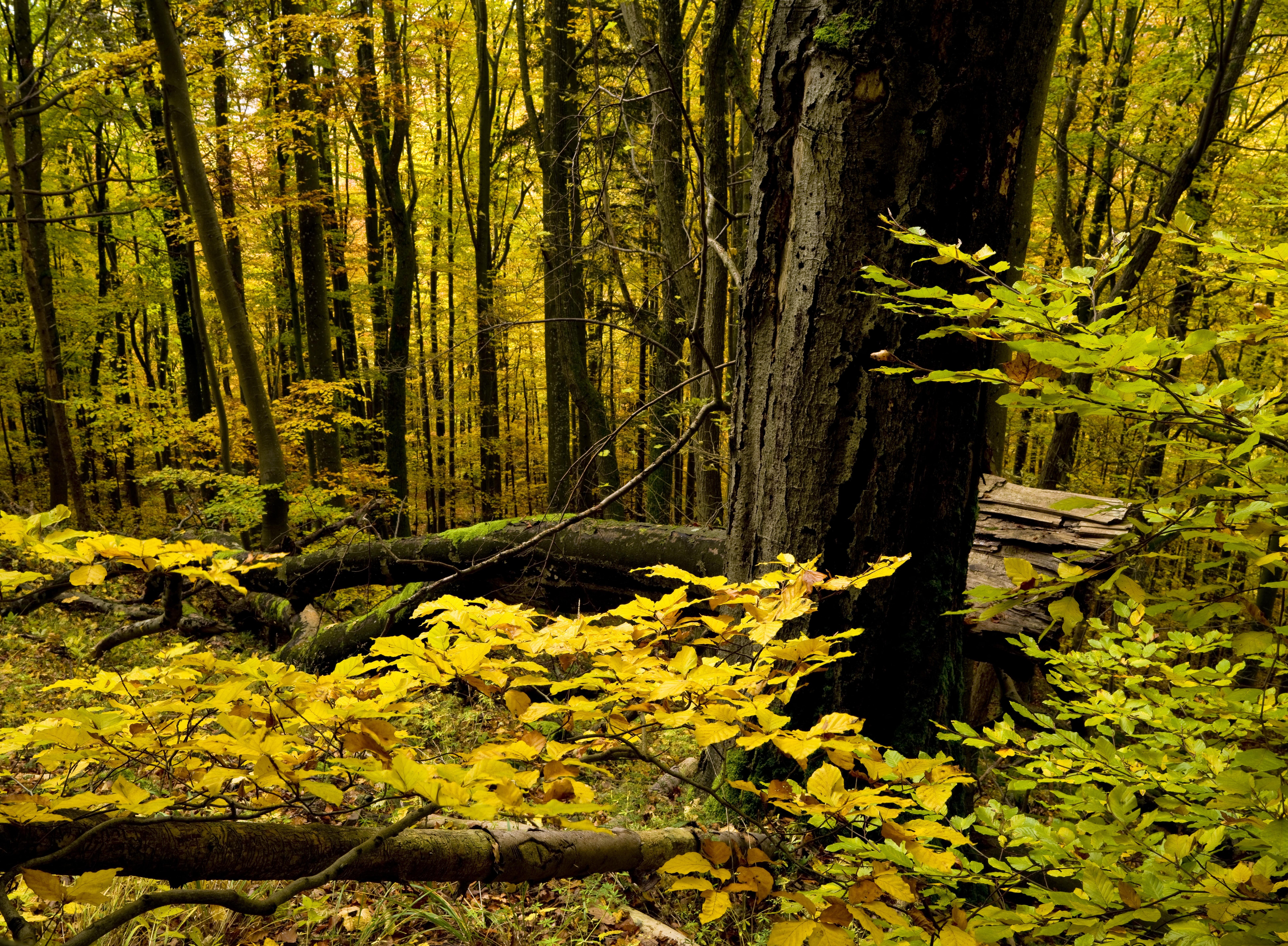 Franciaországnyi területtel nőttek a világ természetes erdői az elmúlt 20 évben