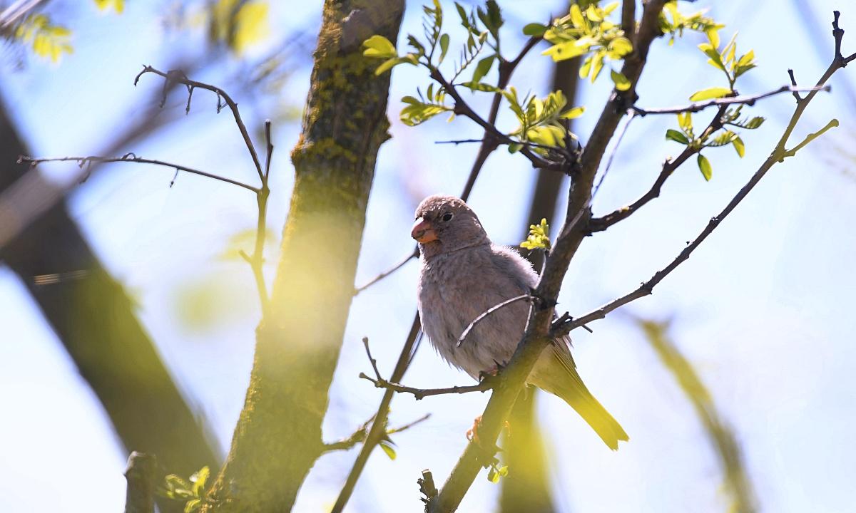 Sosem látott madár bukkant fel Magyarországon, két percig mutatta magát, aztán berepült egy szőlőültetvénybe