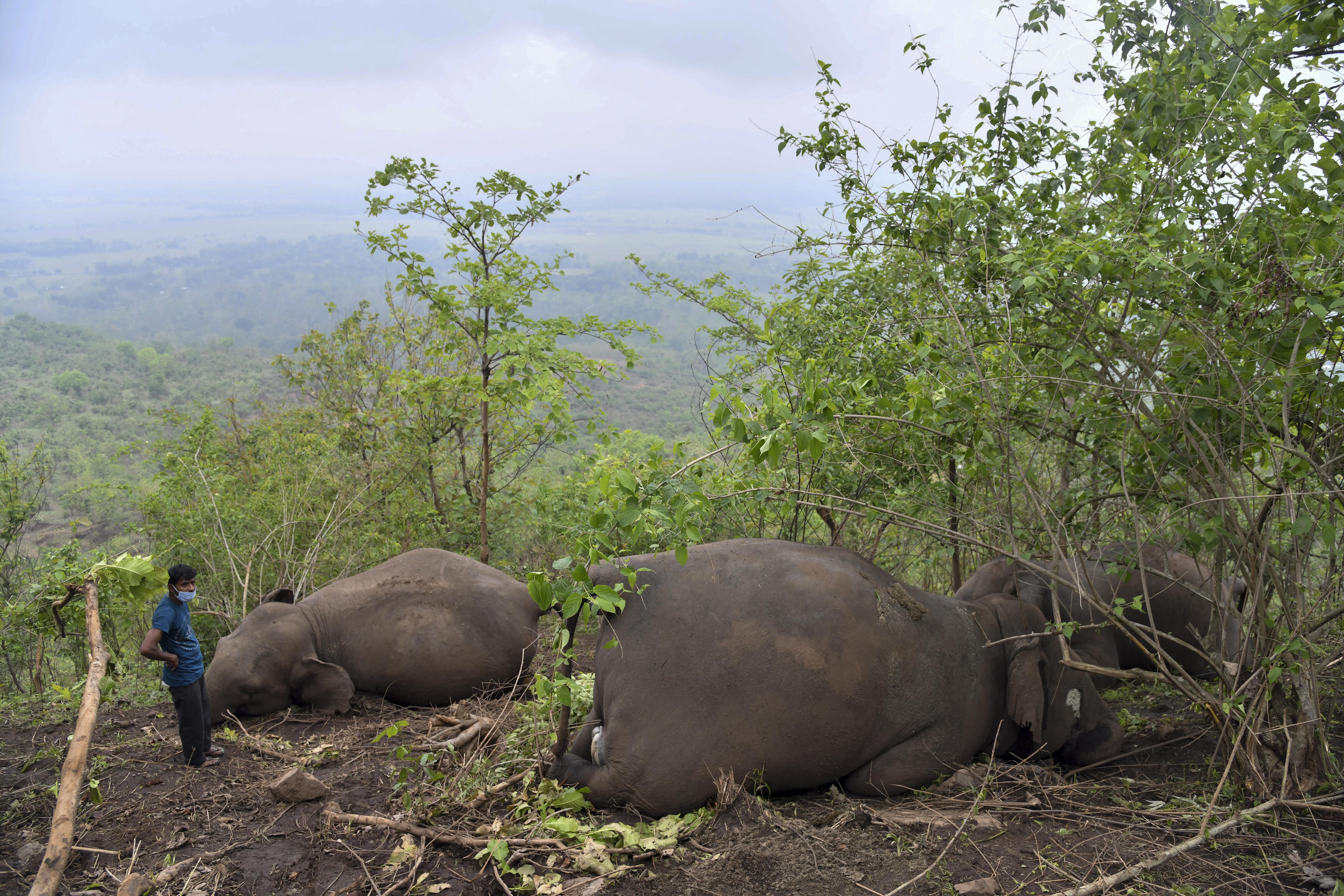 Villámcsapás ölhetett meg 18 elefántot Indiában