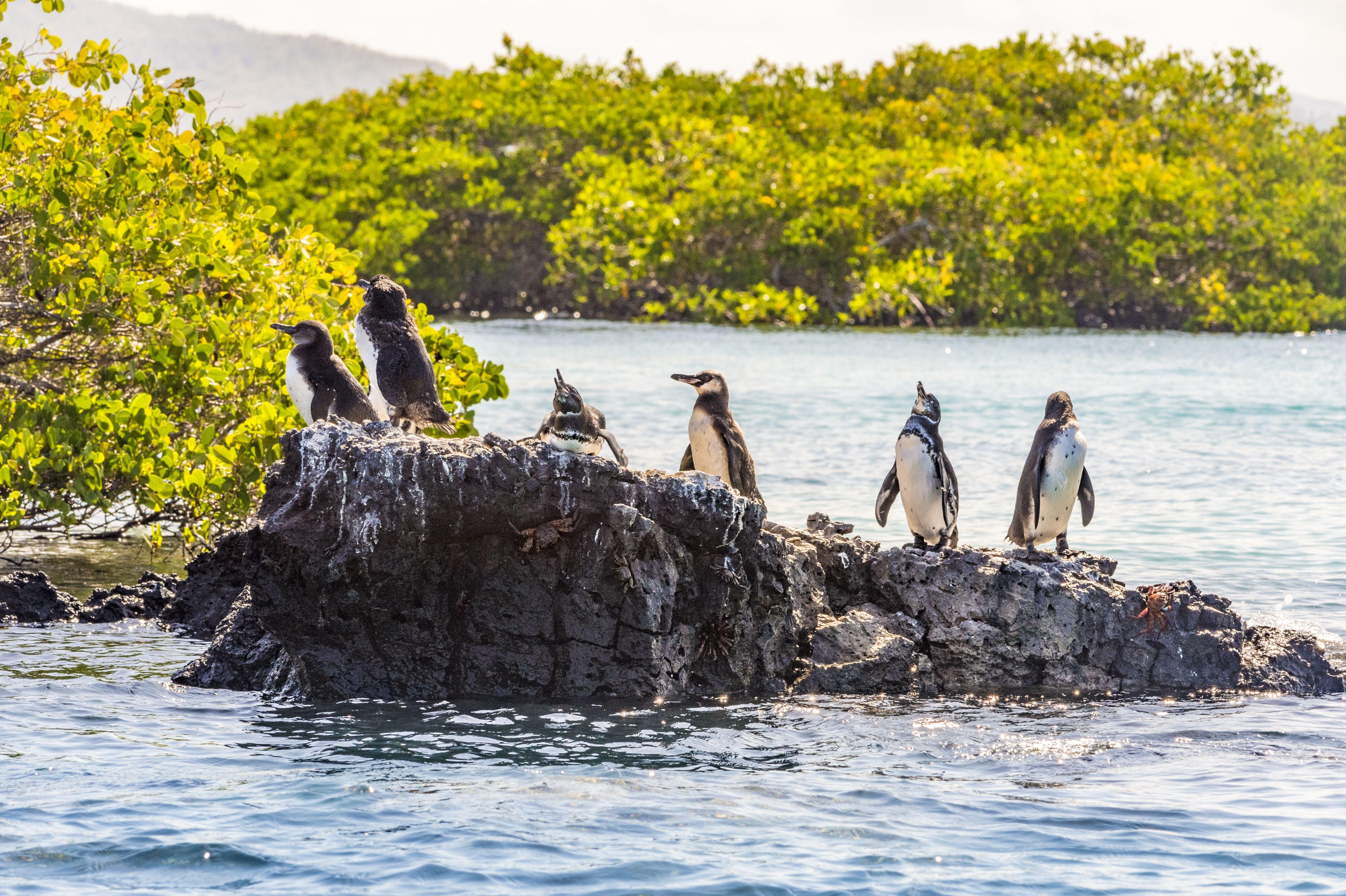 Leonardo DiCaprio 43 millió dollárt ajánlott fel a Galápagos-szigetek visszavadítására