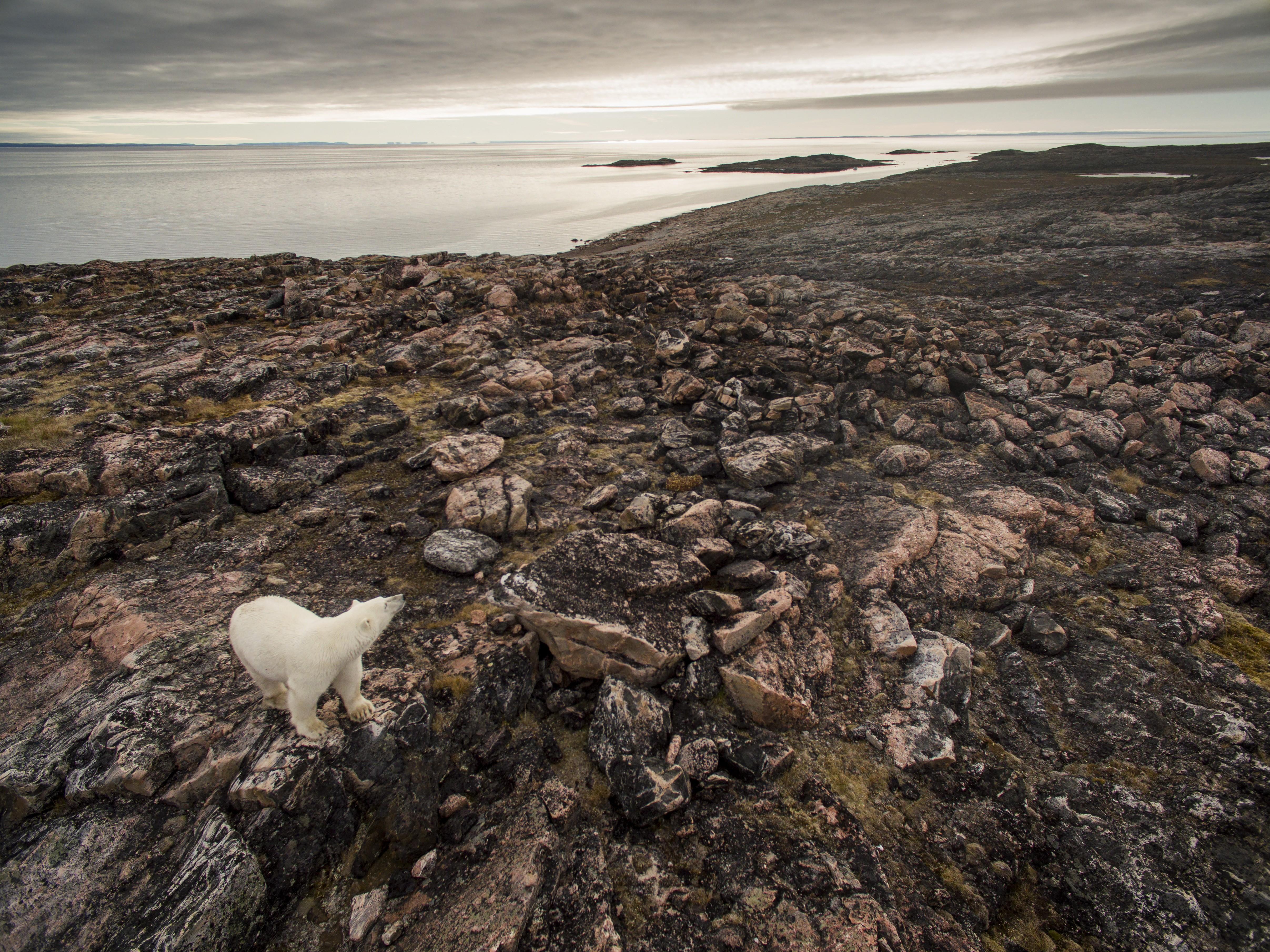 Az Északi-sarkkörön már most 31 fokot mértek