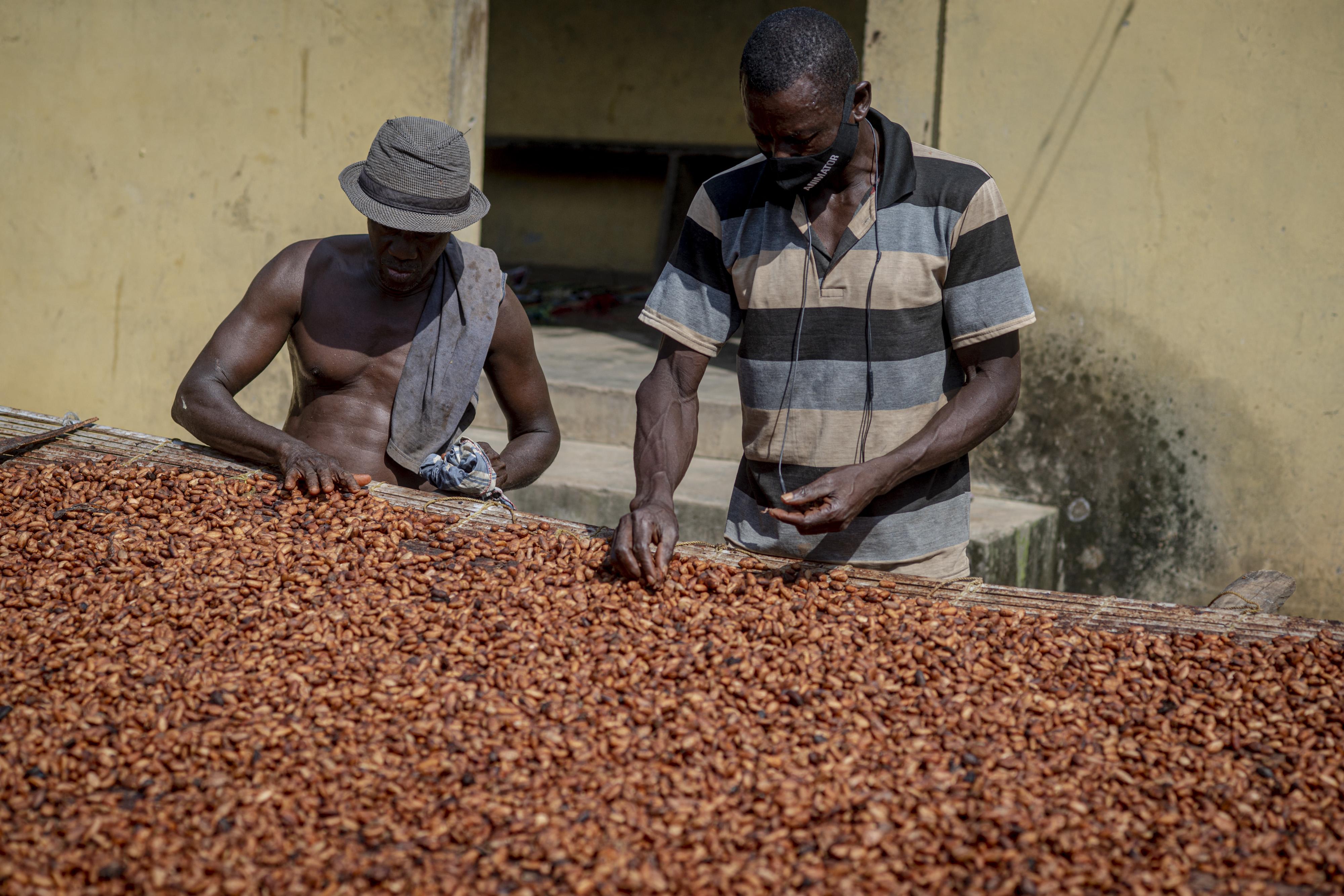 Ghána nem adna több kakaóbabot Svájcnak, inkább otthon gyártanának csokoládét