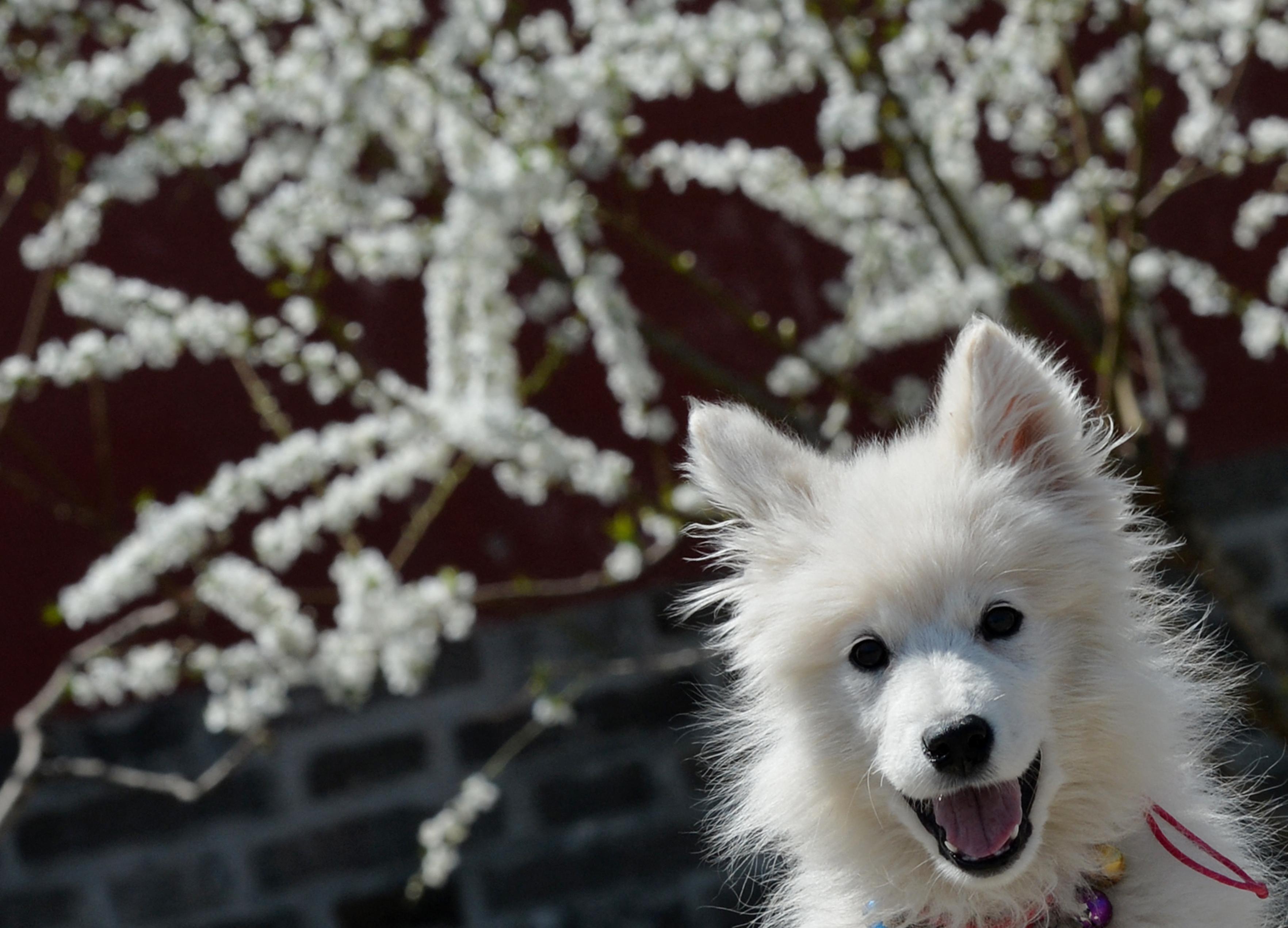 Egy hetet kóborolt a jégmezőkön egy orosz kutya, mielőtt megmentették