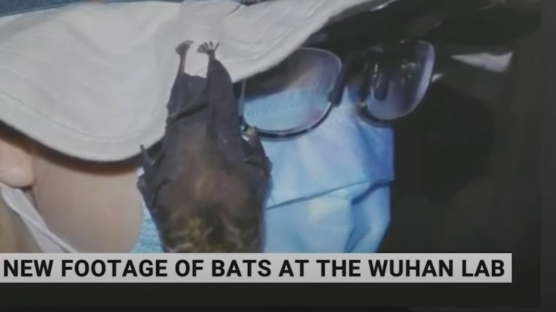 A vuhani laborban tartott denevérekről kerültek elő felvételek