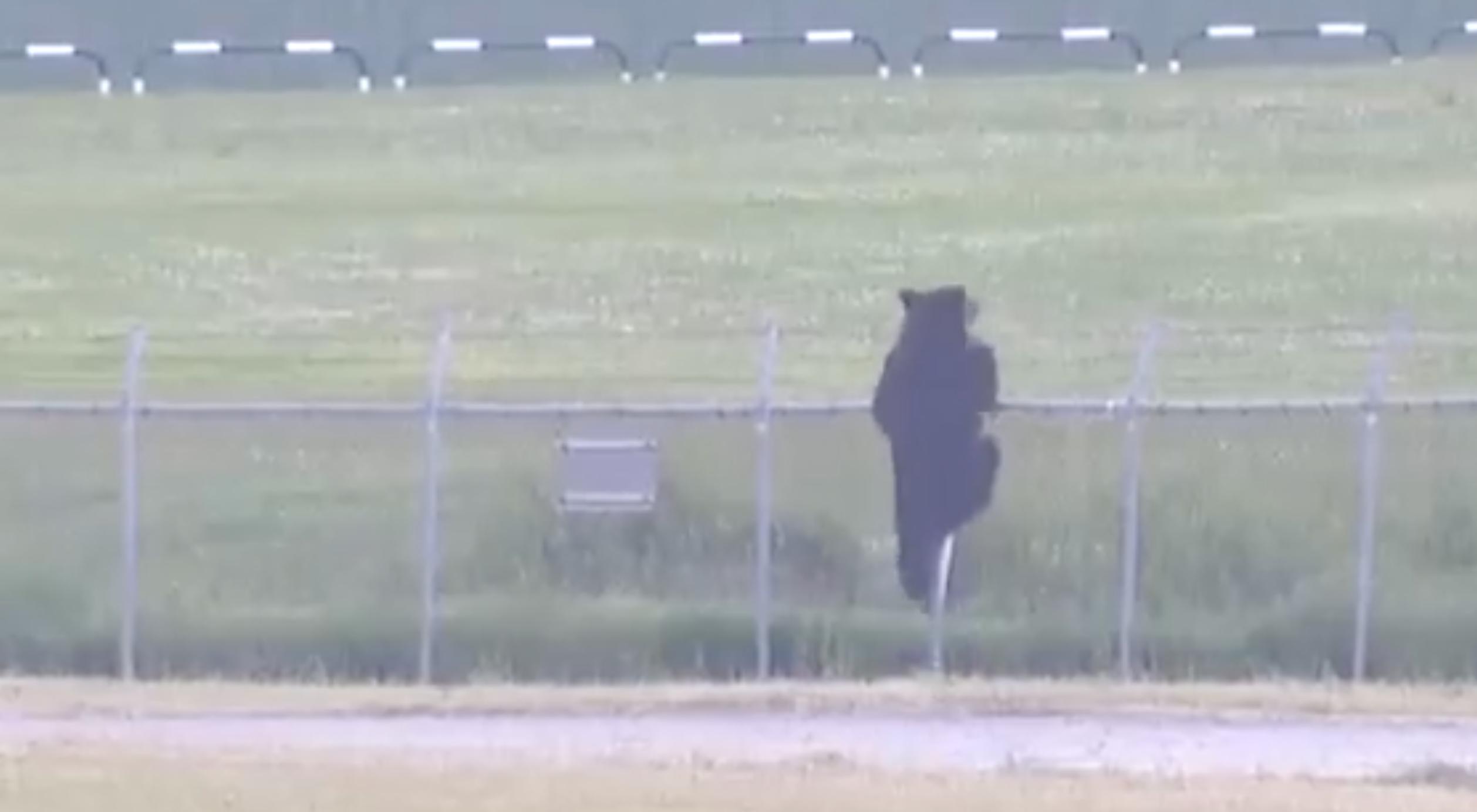 Agyonlőttek egy medvét Japánban, miután beszabadult egy katonai bázisra