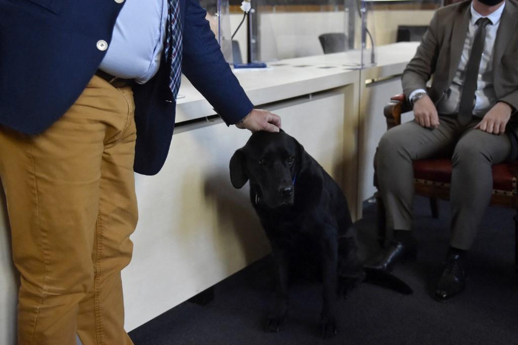 Ha egy okos kutya van velük, bátrabban beszélnek az erőszak áldozatai