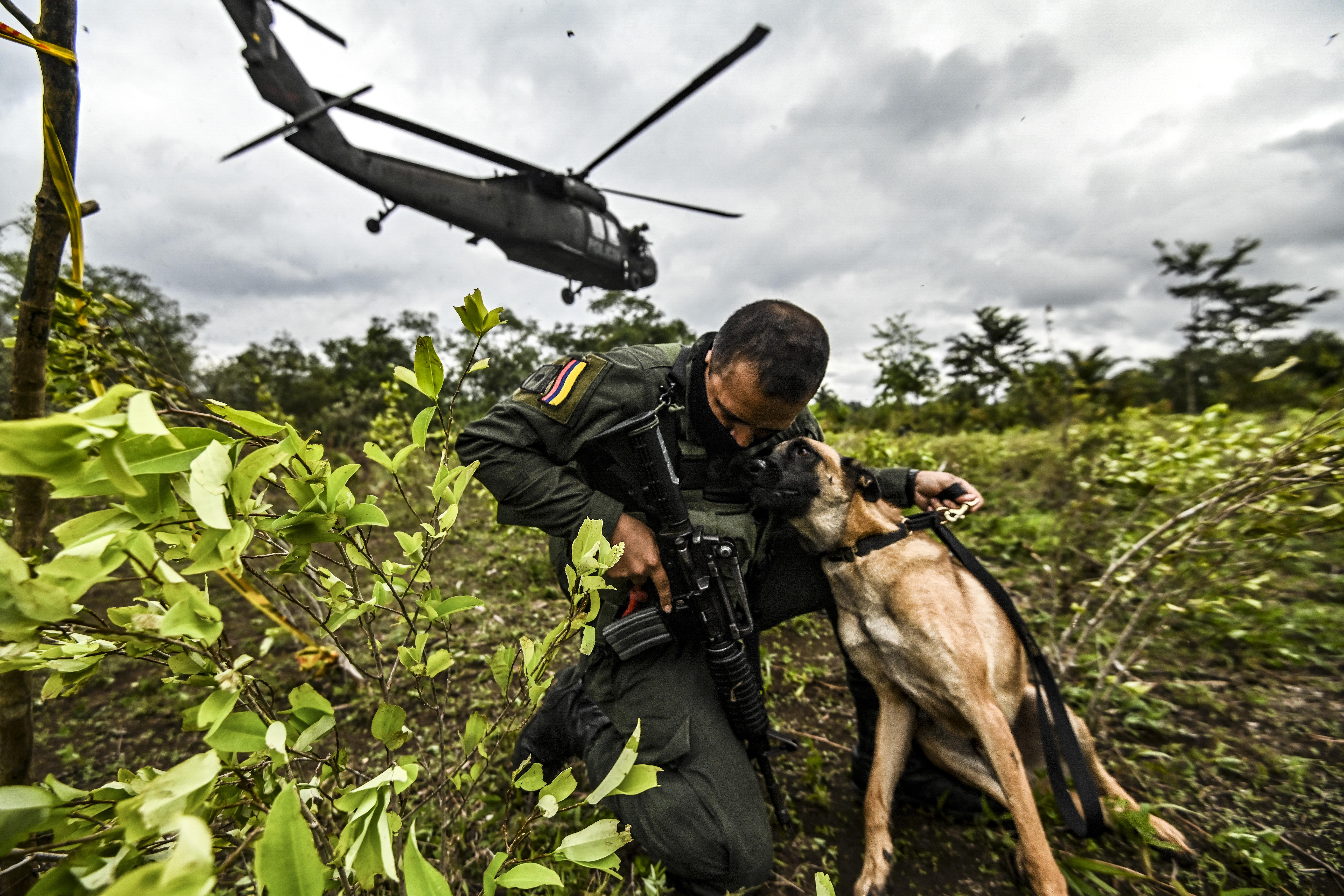 Nagyot nőtt tavaly a kokaültetvények területe Kolumbiában