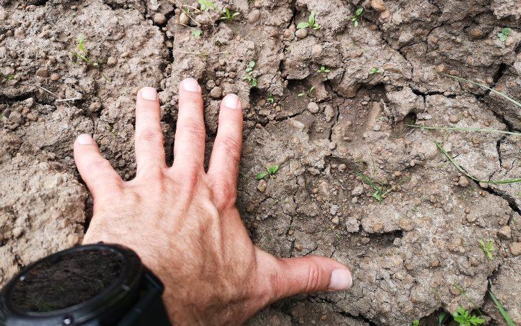 Állítólag medvenyomokat talált egy túrázó a Balaton-felvidéken