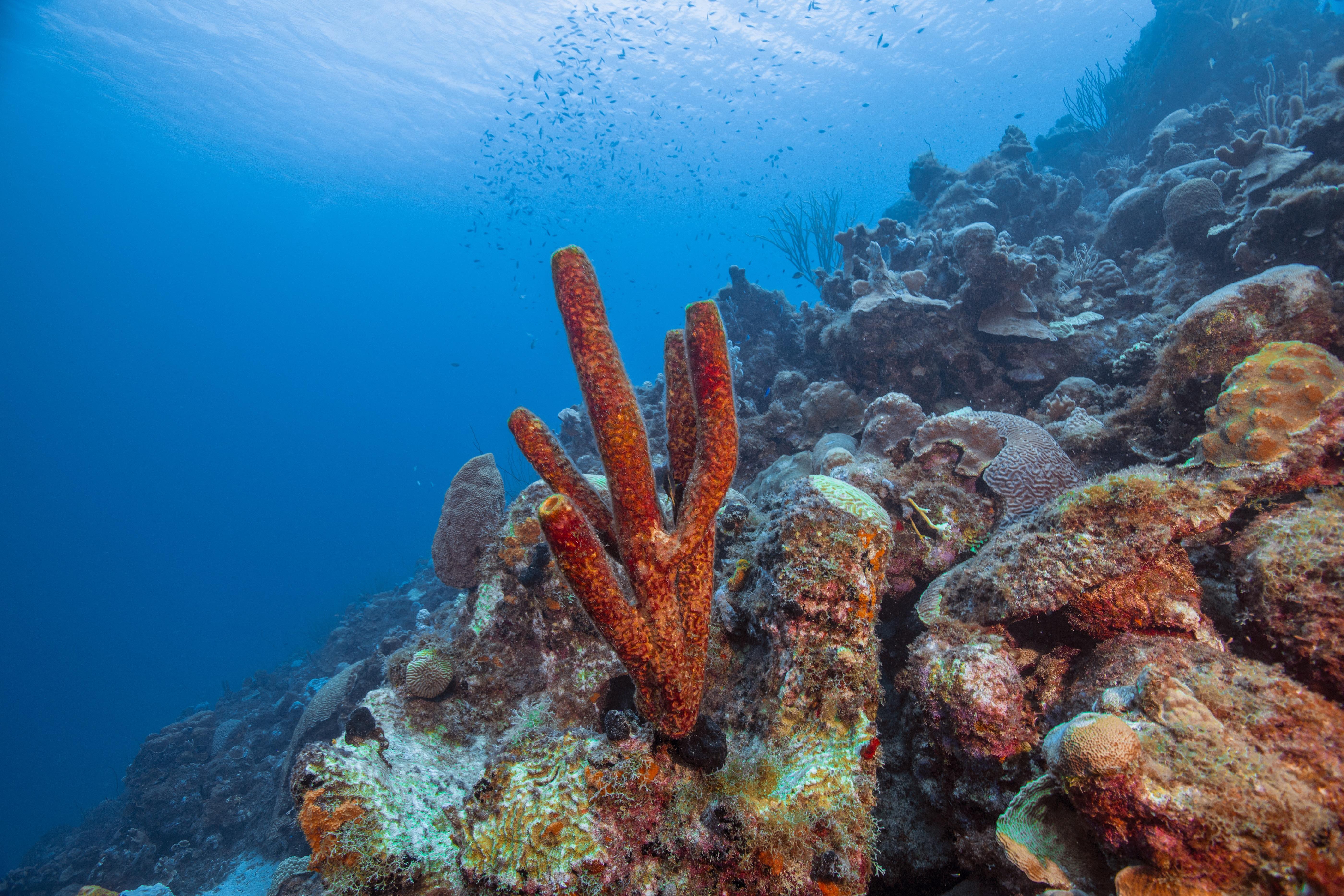 A hajók szennyvize miatt pusztulhatnak a korallok a Karib-tengeren