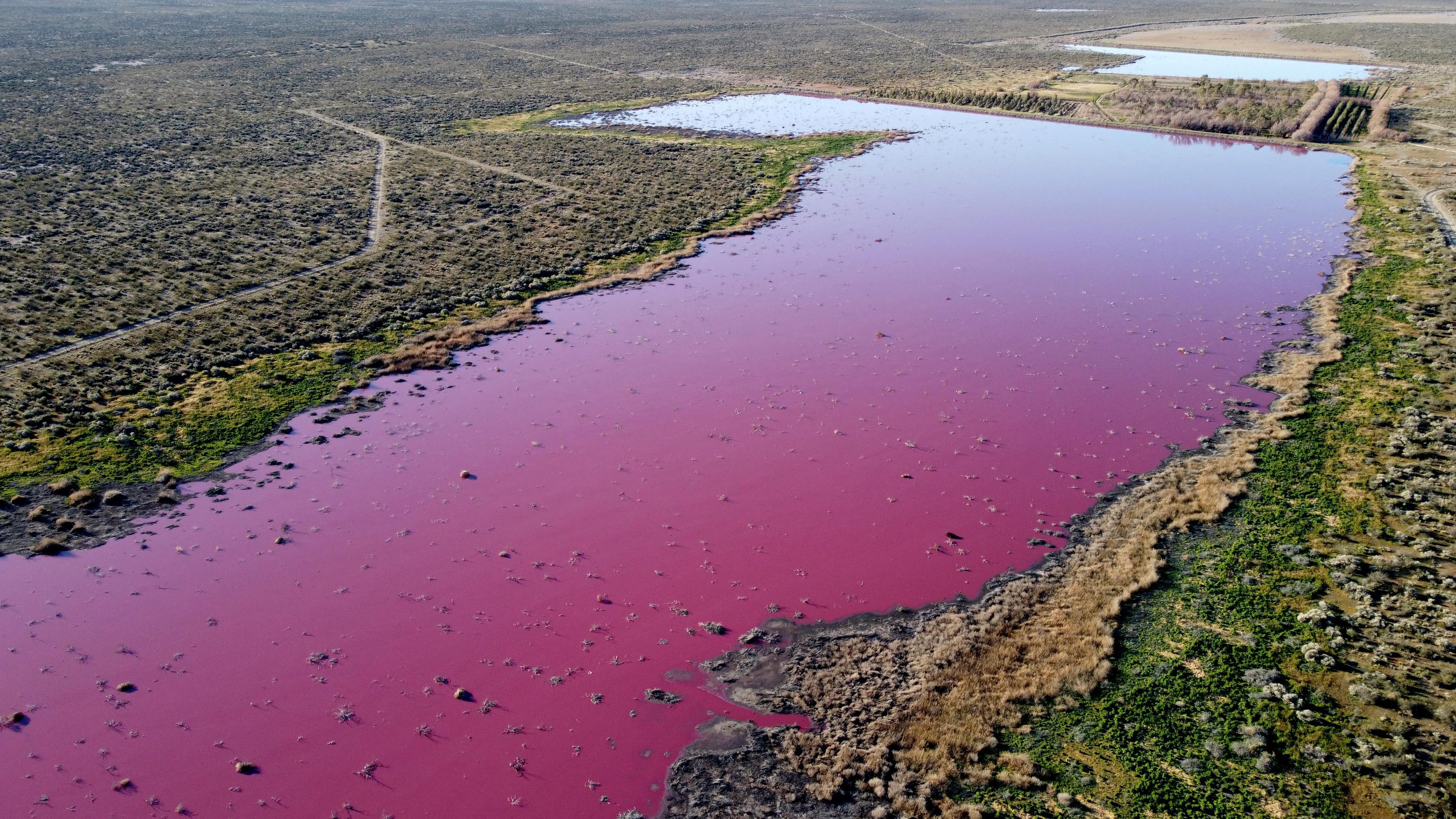 Bíborszínűre festett egy lagúnát a szennyezés Patagóniában