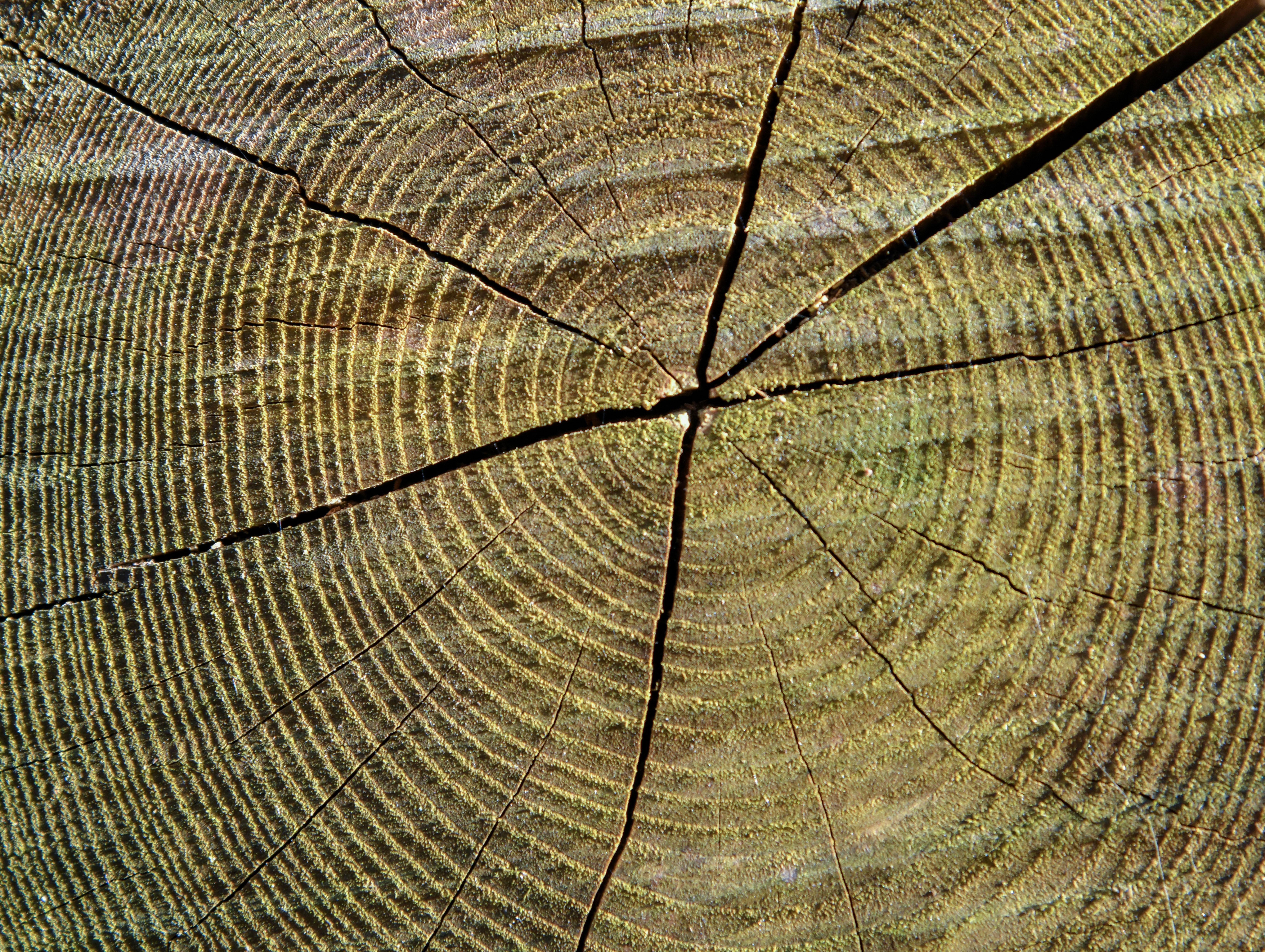 """""""A fák ugyanazok maradtak, de kicsúszott alóluk a klíma"""" – Mit lehet megtudni a fák évgyűrűinek vizsgálatából?"""