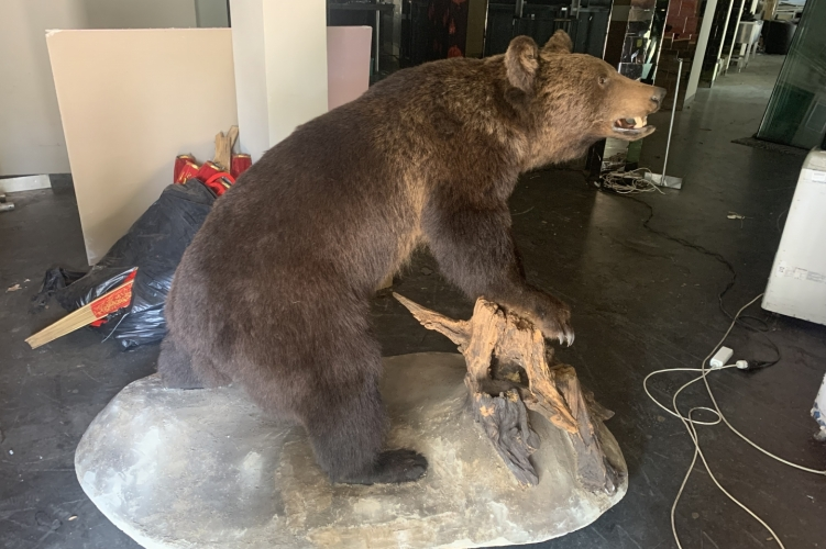 Kétmillió forintért árult preparált medvét az interneten