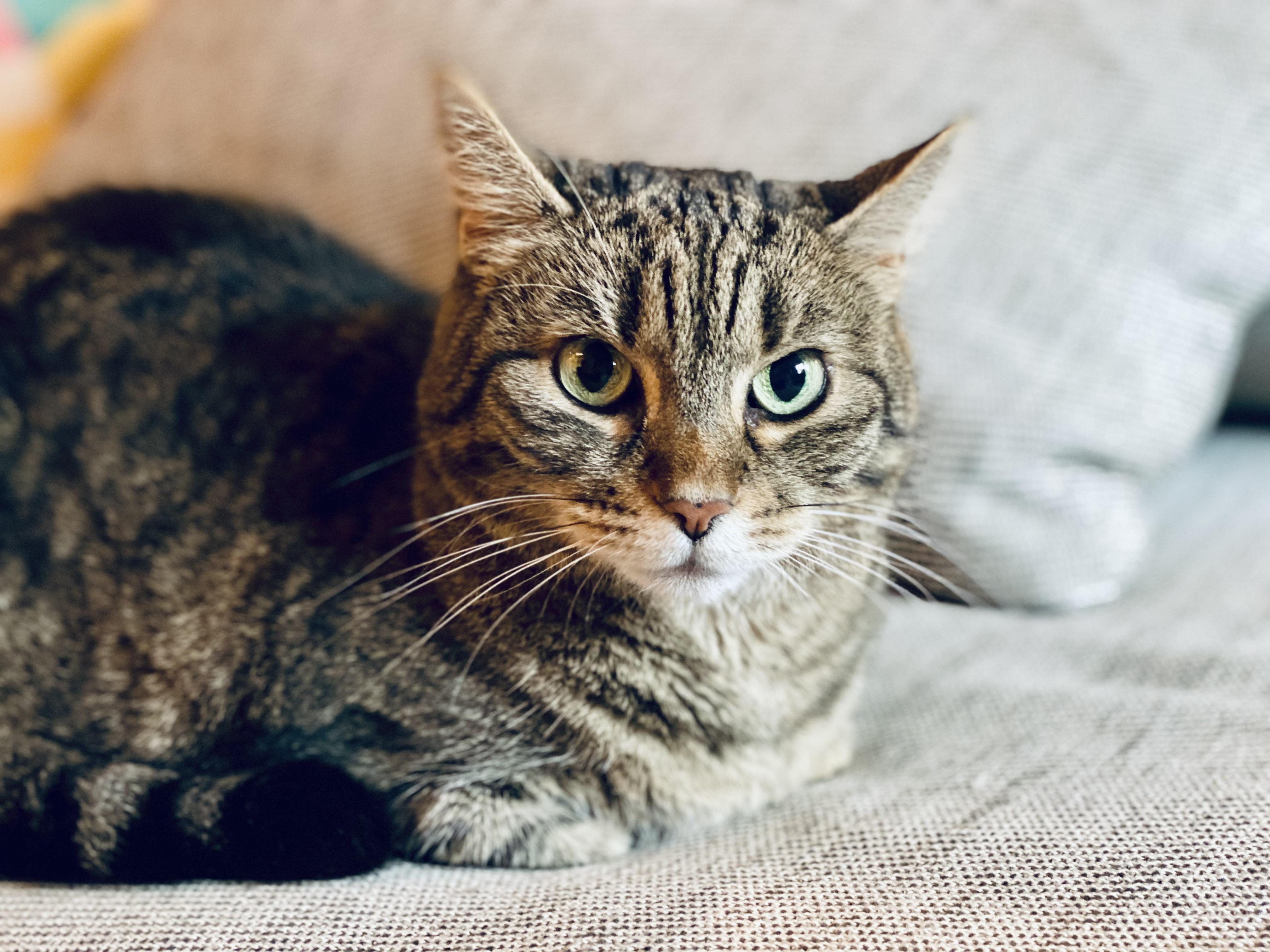 Rengeteg macska pusztul el az Egyesült Királyságban, feltehetően egy széles körben forgalmazott macskaeledel miatt