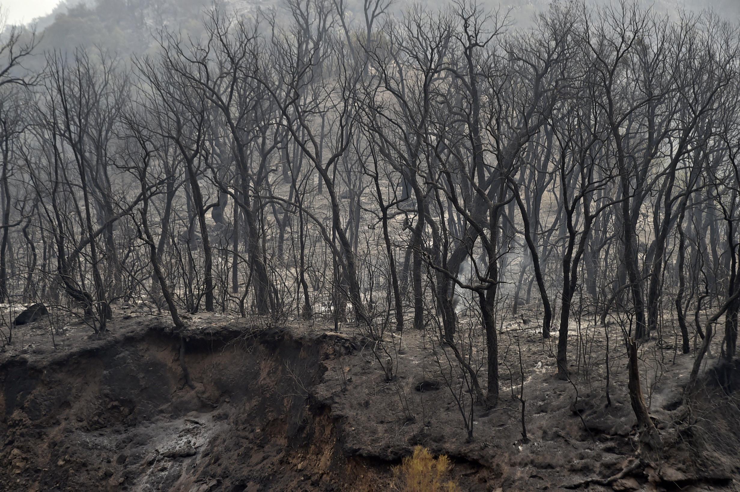 Algériában is egyre durvábbak az erdőtüzek, már legalább 65 ember halt meg
