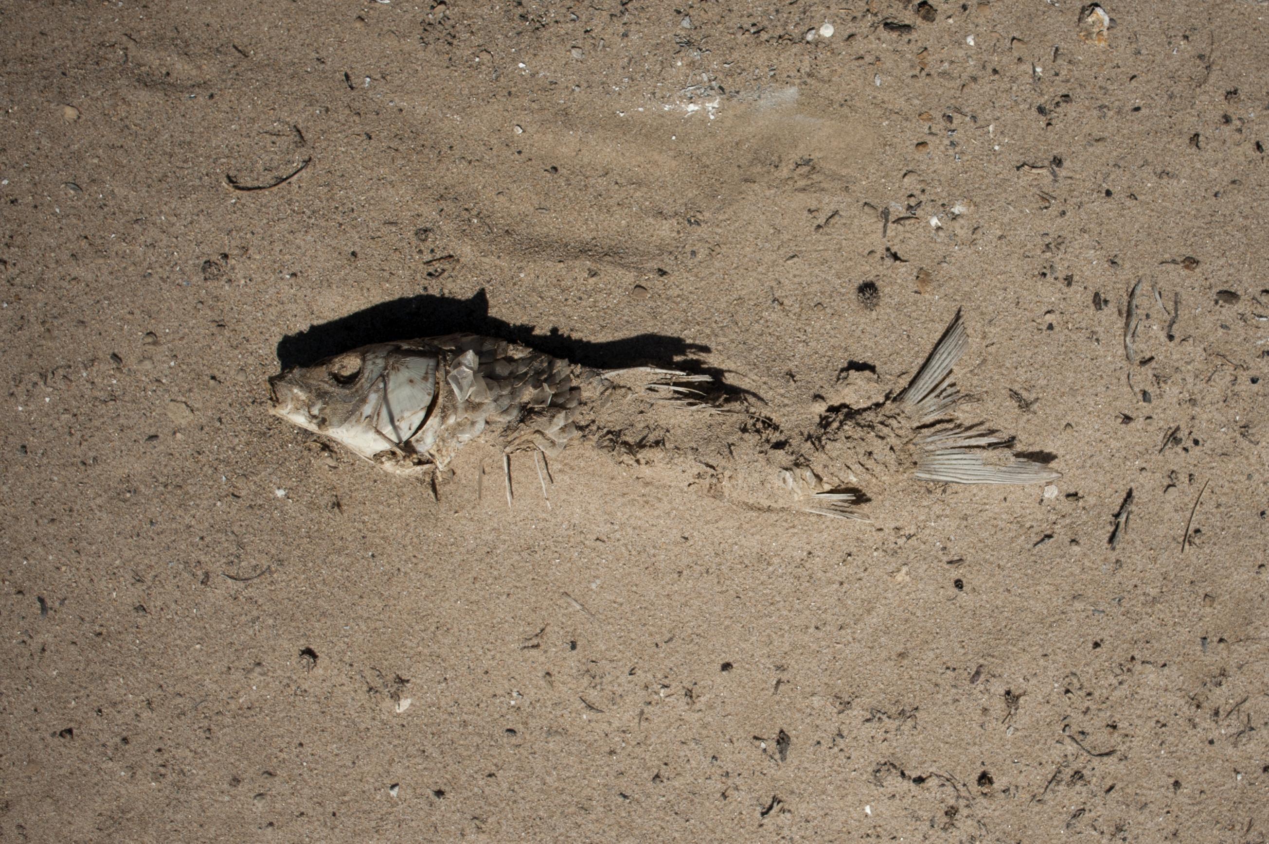Több tonna döglött halat mosott partra a víz egy spanyol lagúnában