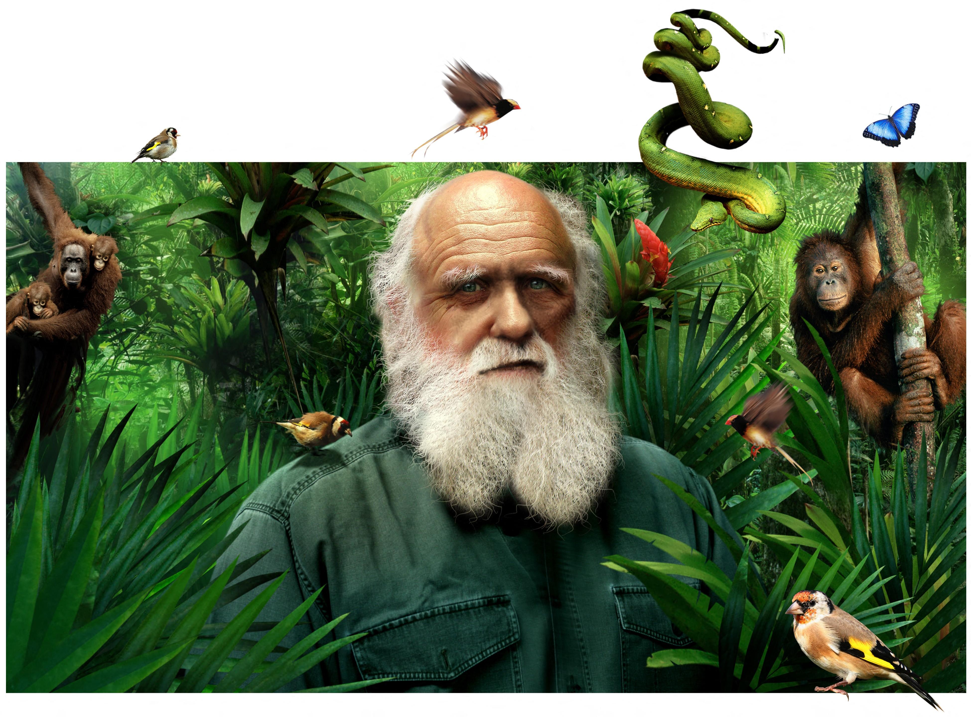 Történelmi mérföldkő: már az amerikaiak többsége is hisz az evolúcióban