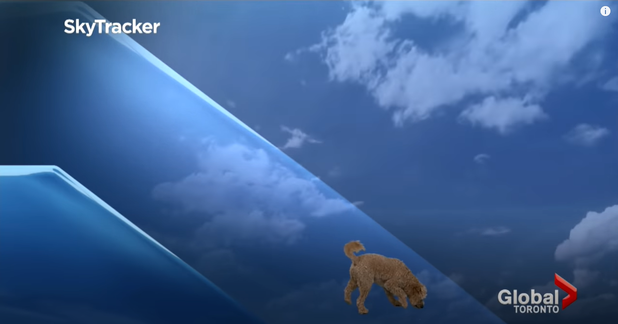 Az időjárásjelentő éhes kutyája élő adásban ment oda kunyerálni, ebből lett 2021 legaranyosabb jelenete