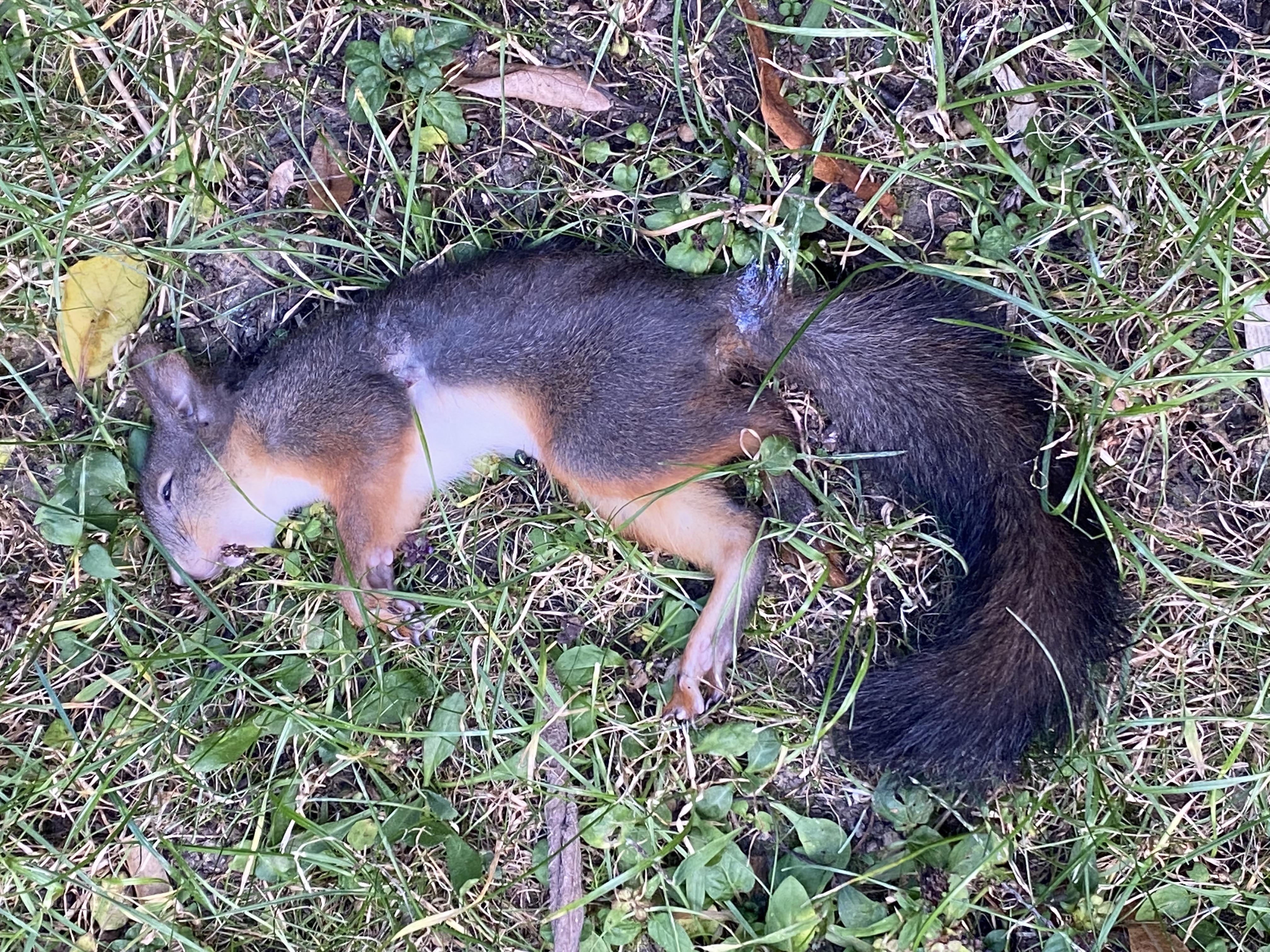 Milyen állat haraphat ketté mókusokat a Moszkva tértől légvonalban 600 méterre?