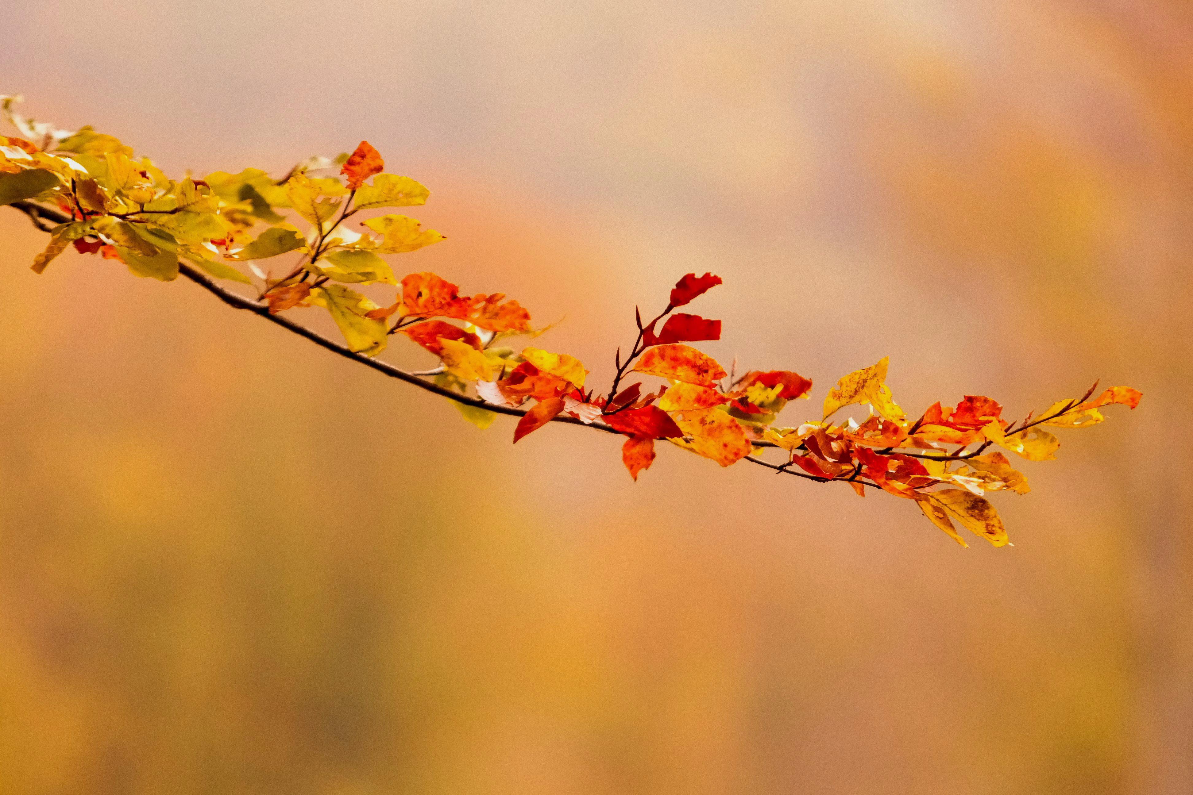 Egyre melegebb hazánkban a vénasszonyok nyara, emiatt eltűnhetnek az őszi sárgás-piros színek