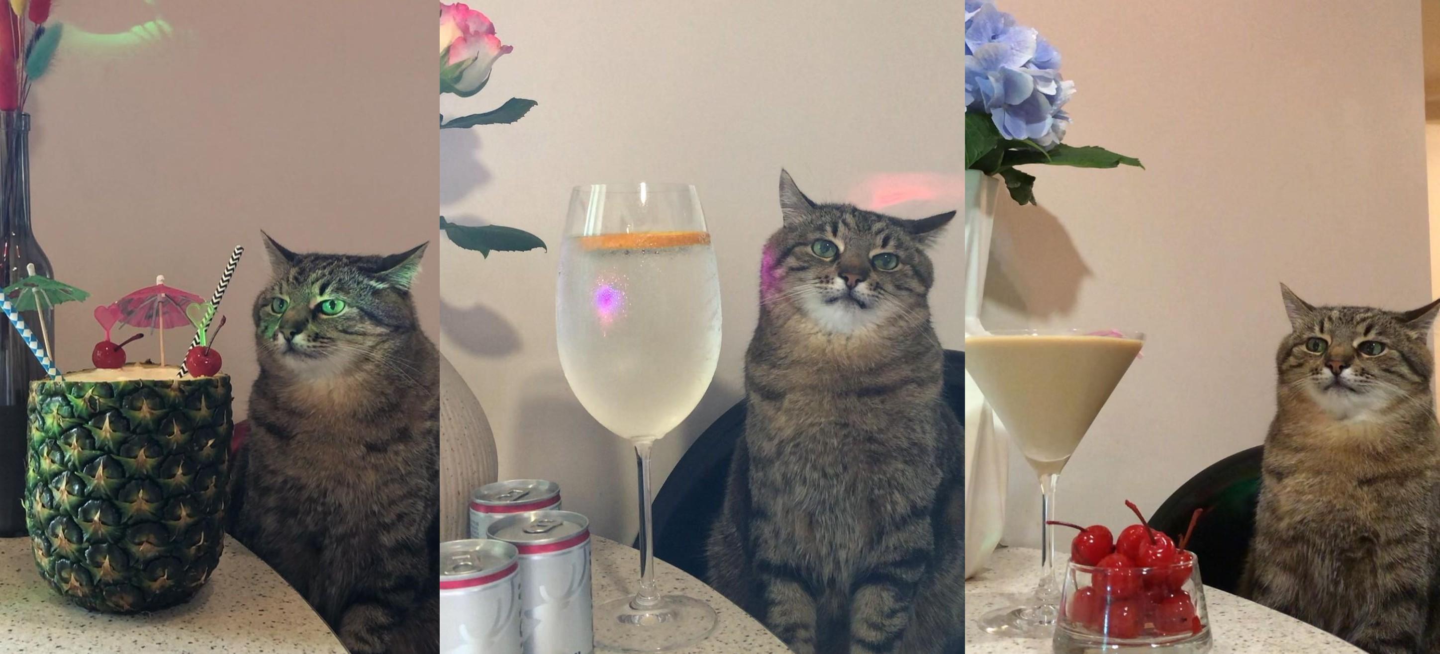 Az ukrán macska, aki nem csinál semmit, de milliók nézik