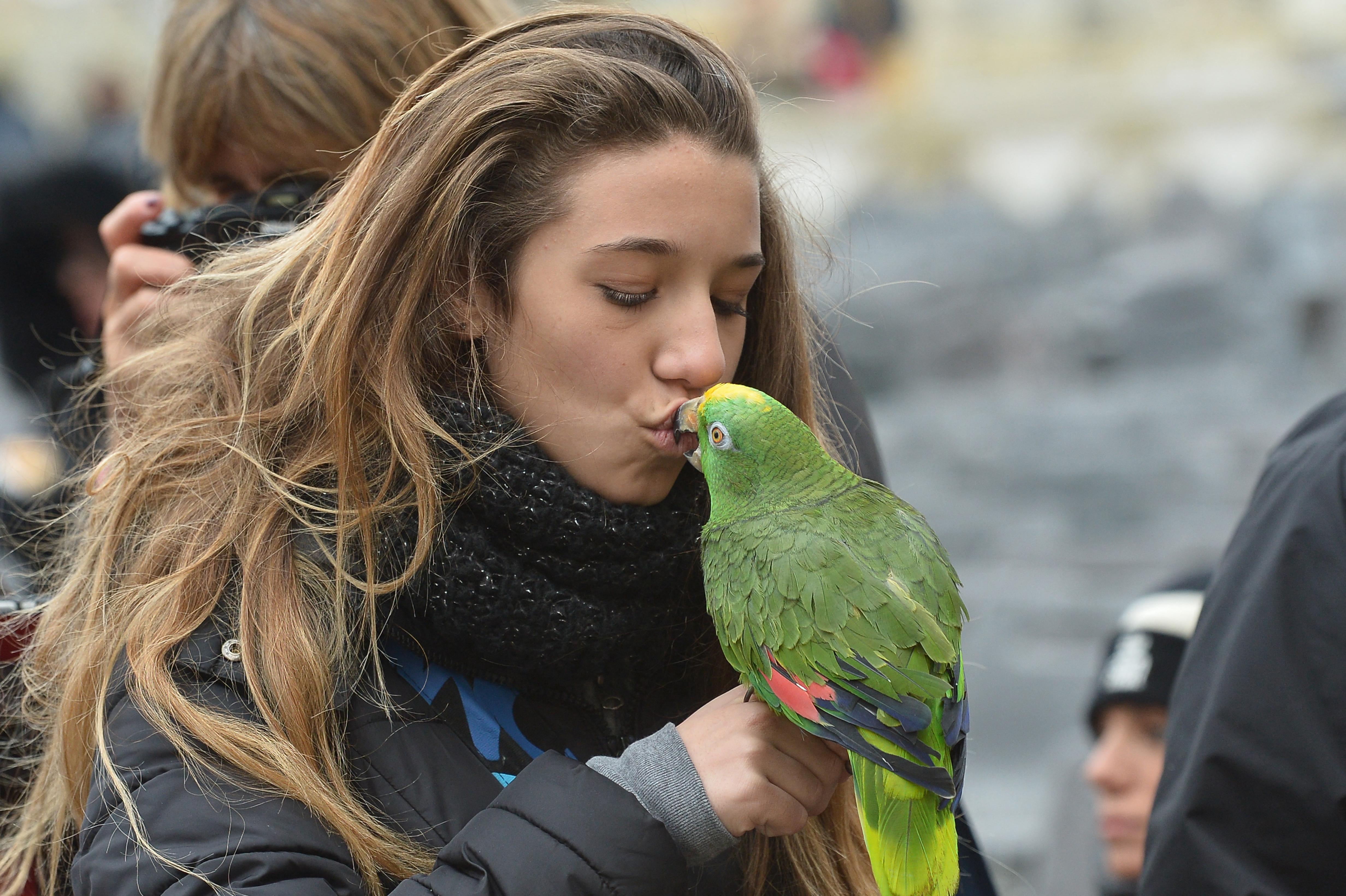 Nagyon aranyos a bújós papagáj, de nem hozzánk kéne bújnia