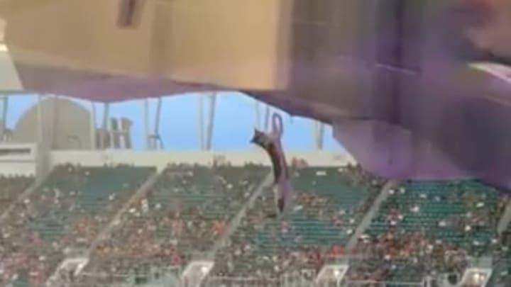 A stadion felsőbb szektorából zuhant alá a macska, a nézők egy zászlóval csillapították az esését