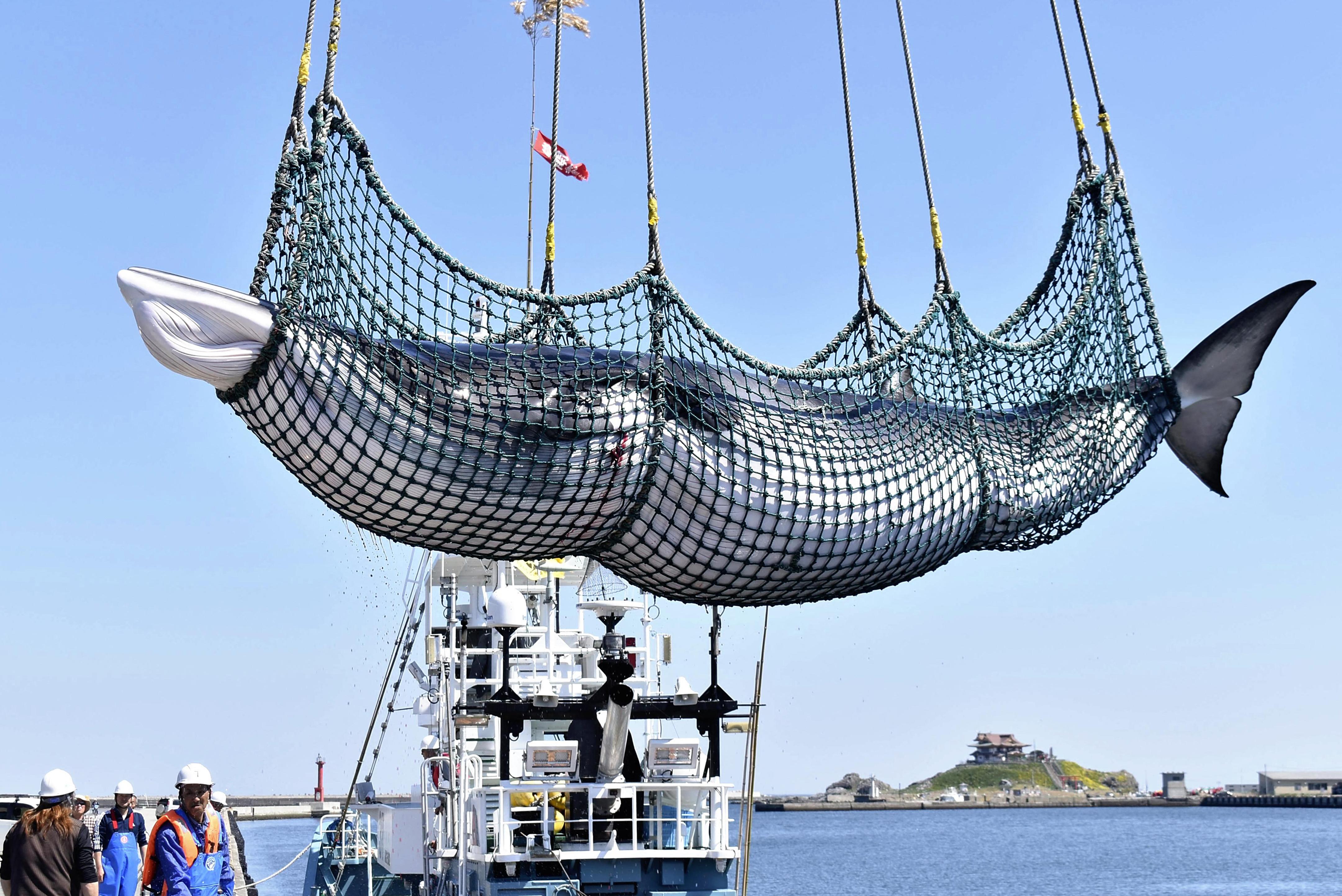"""""""Az óceánok megmentéséről szóló tweeted nem kapott elég figyelmet, ezért most megöljük ezt a veszélyeztetett csukabálnát"""""""