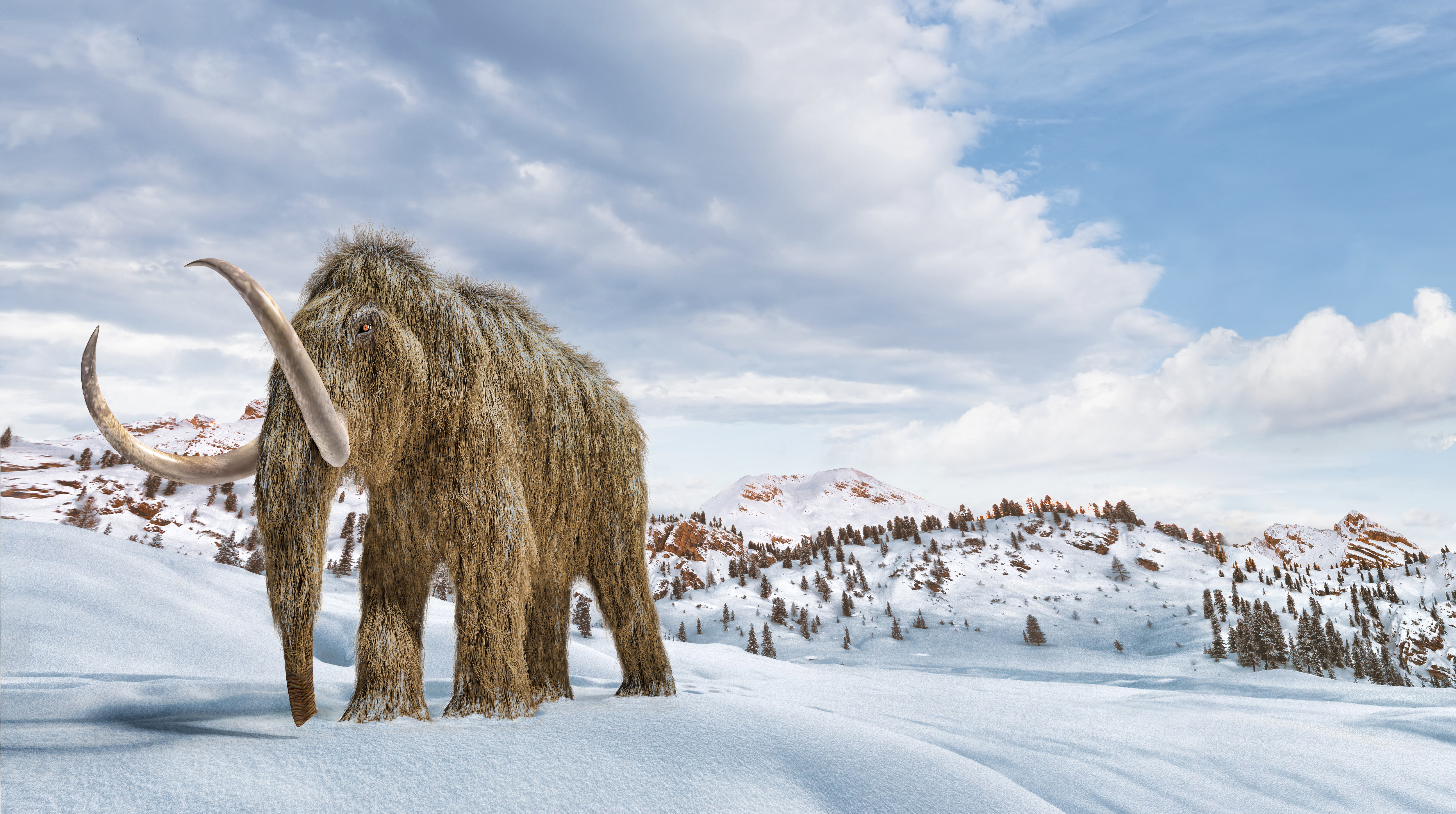Felélesztenék a gyapjas mamutokat, hogy helyreállítsák az ökoszisztémát a tundrán