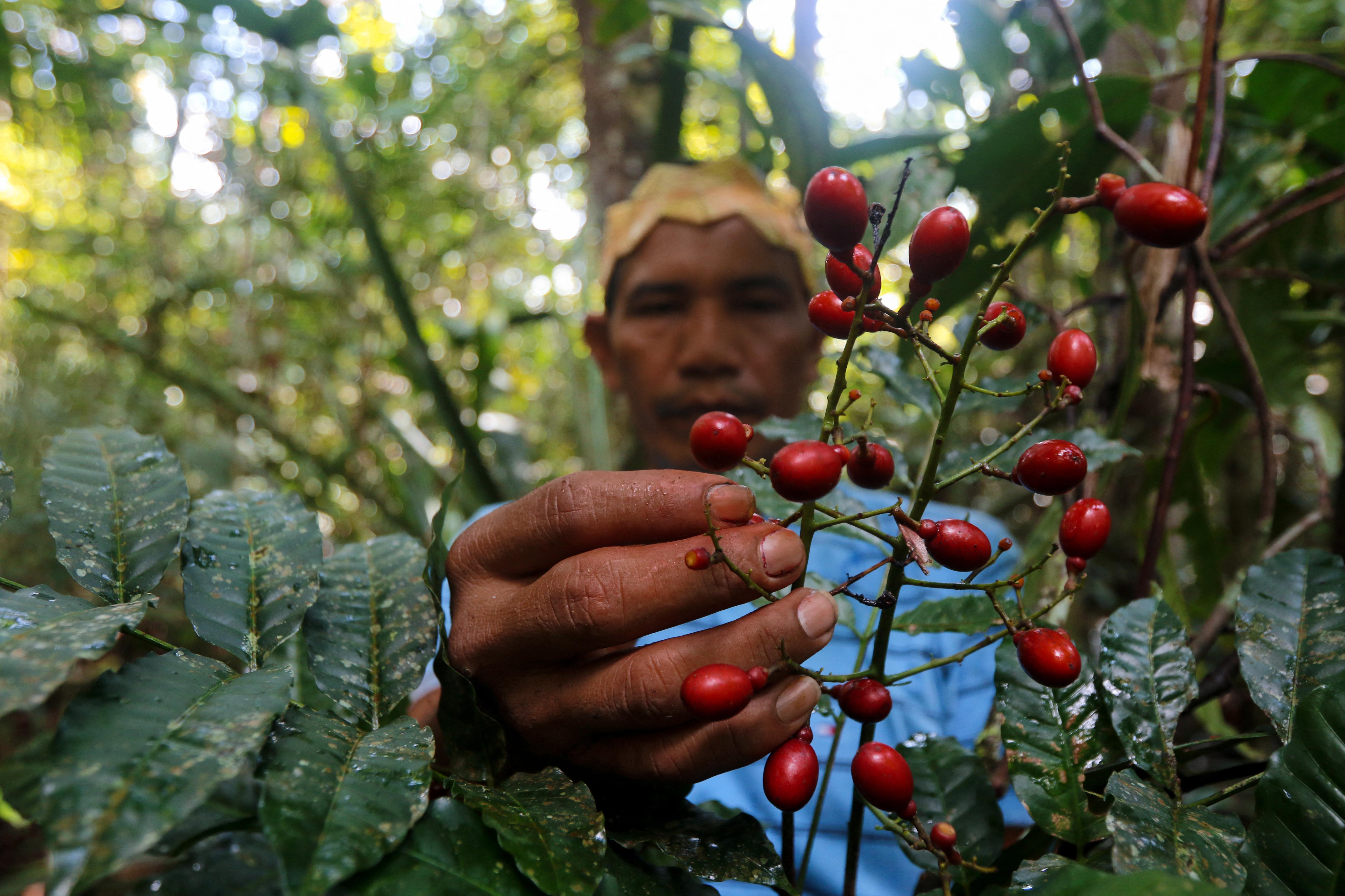 Az őslakos nyelvek kihalásával sok növény gyógyhatásáról szóló tudás is elveszhet