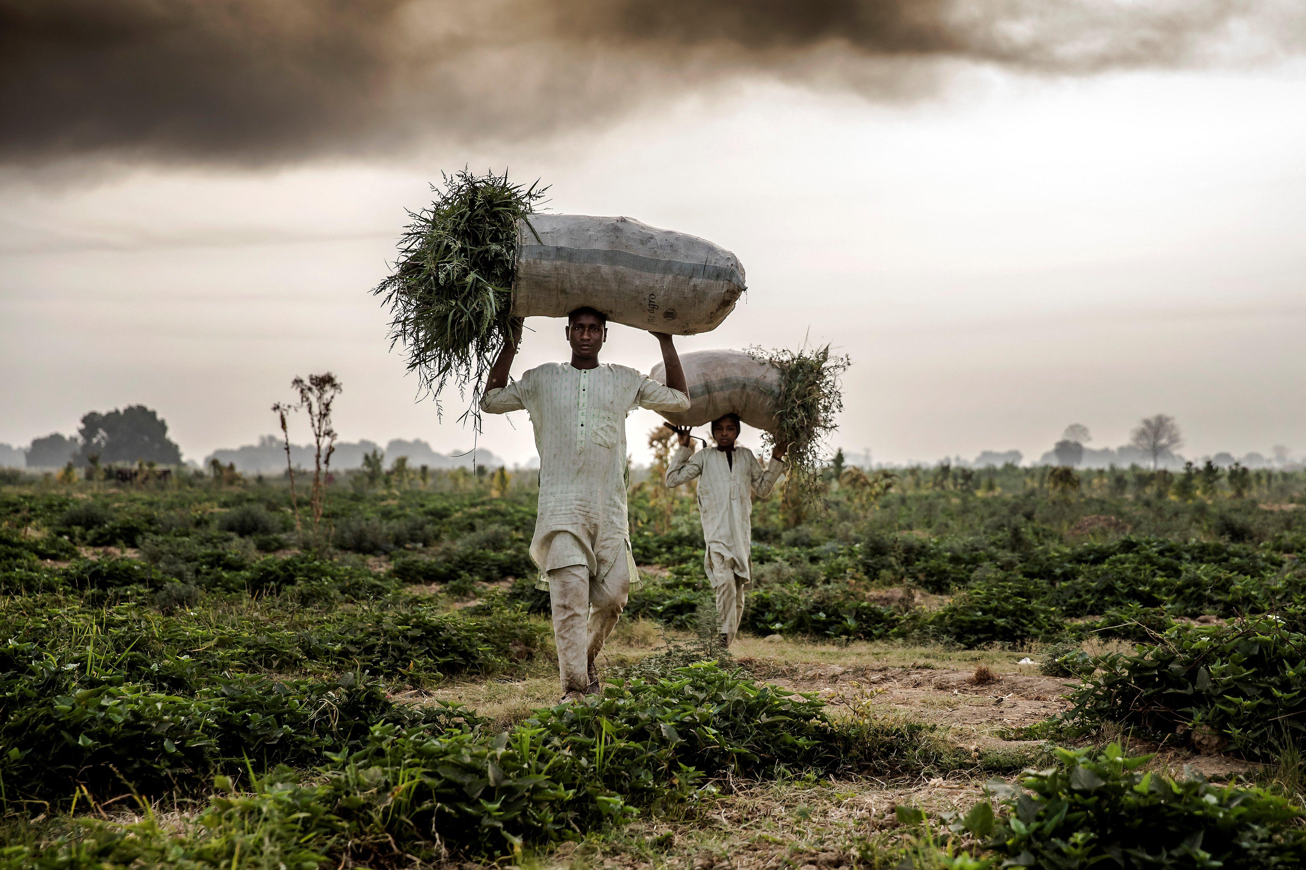 Indul a globális csúcstalálkozó, ahol teljesen átalakítanák a világ élelmiszerrendszerét