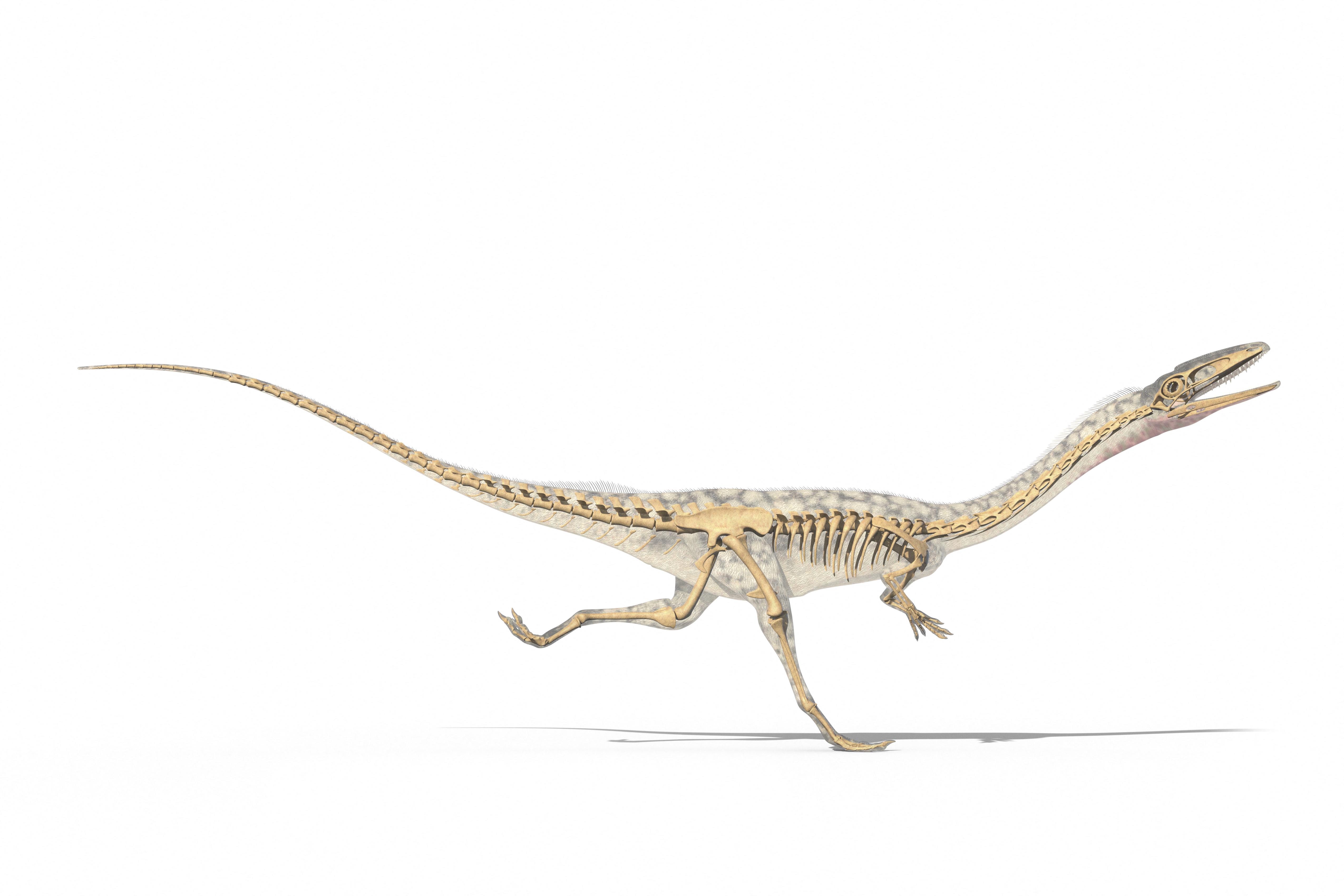 Farokcsóválva közlekedhettek a kétlábú dinoszauruszok