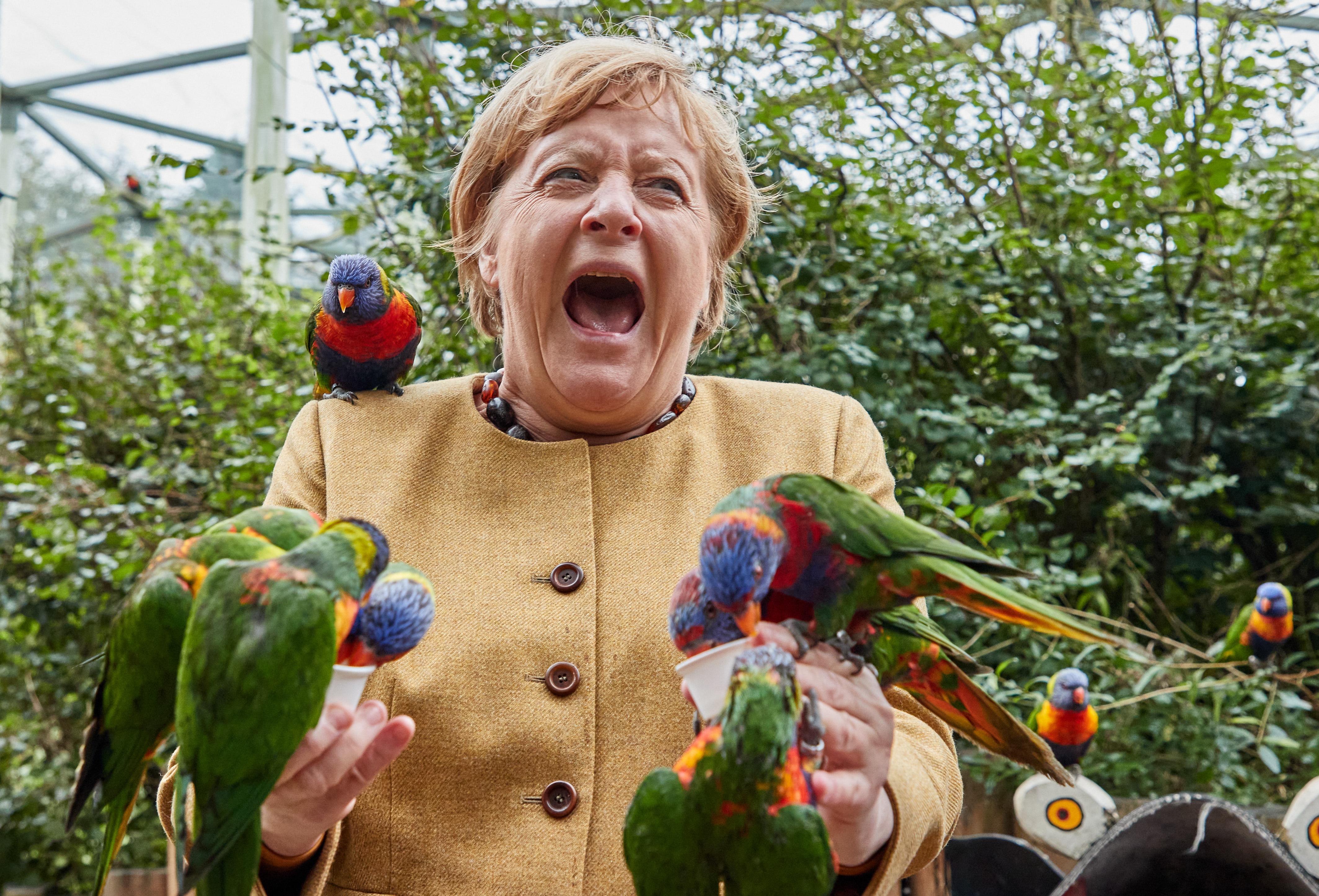 Szivárványlórik rajongták körbe Angela Merkelt a búcsúkörútján